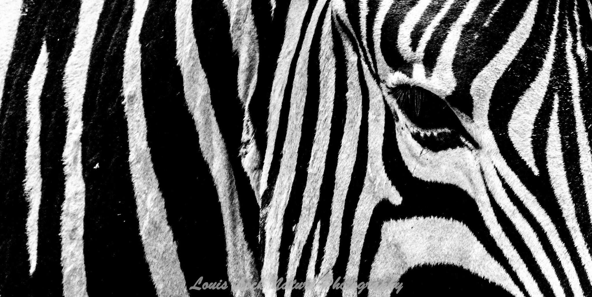 The Striped one by Louis Lock