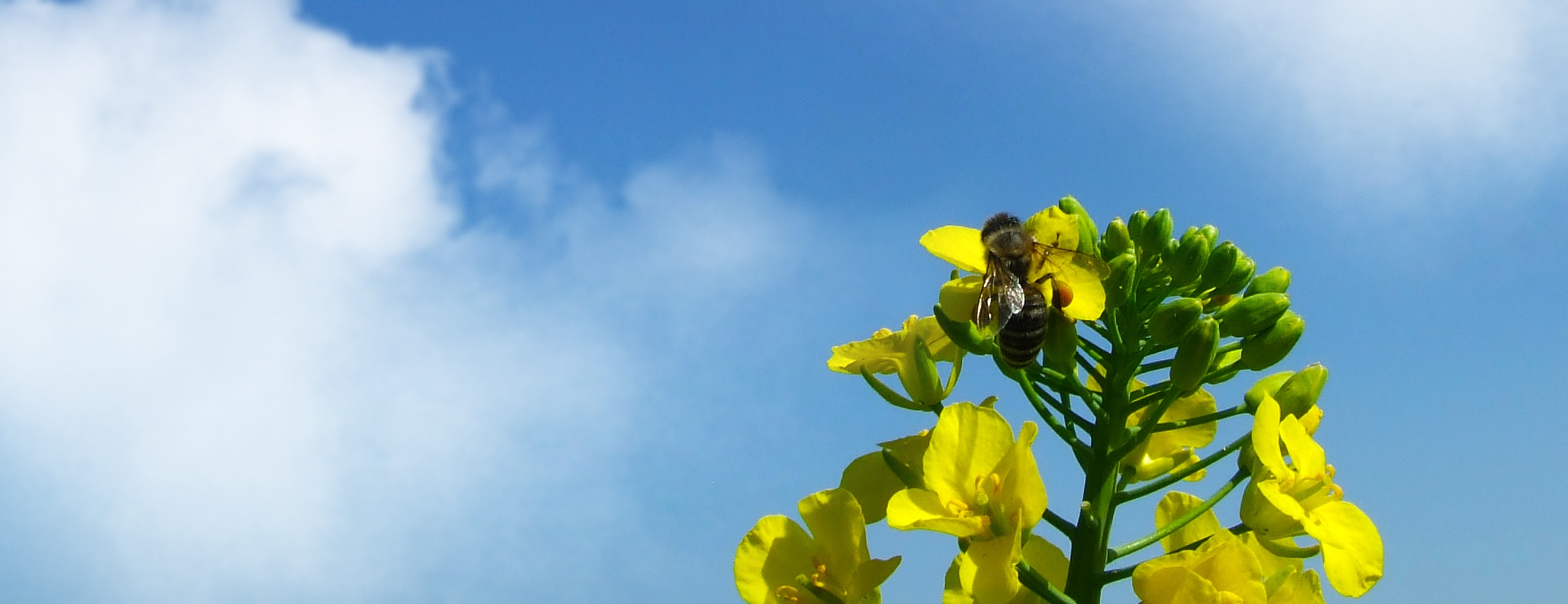 Bee and flower by Josip Kos