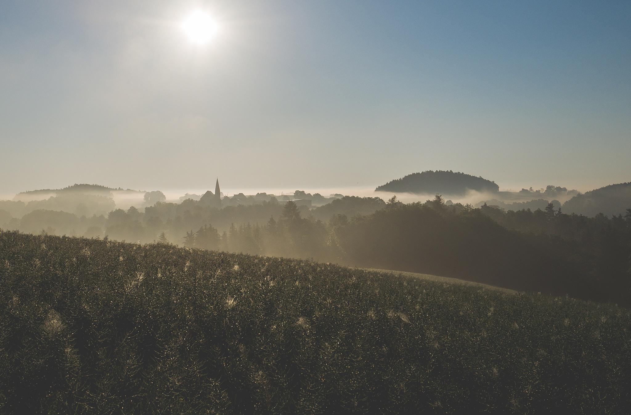Photo in Landscape #bavaria #fog #landscape #art #wallpaper #postr #desktop