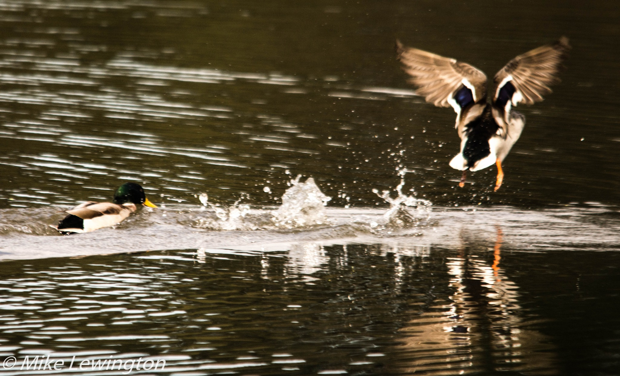 Untitled by Mike Lewington