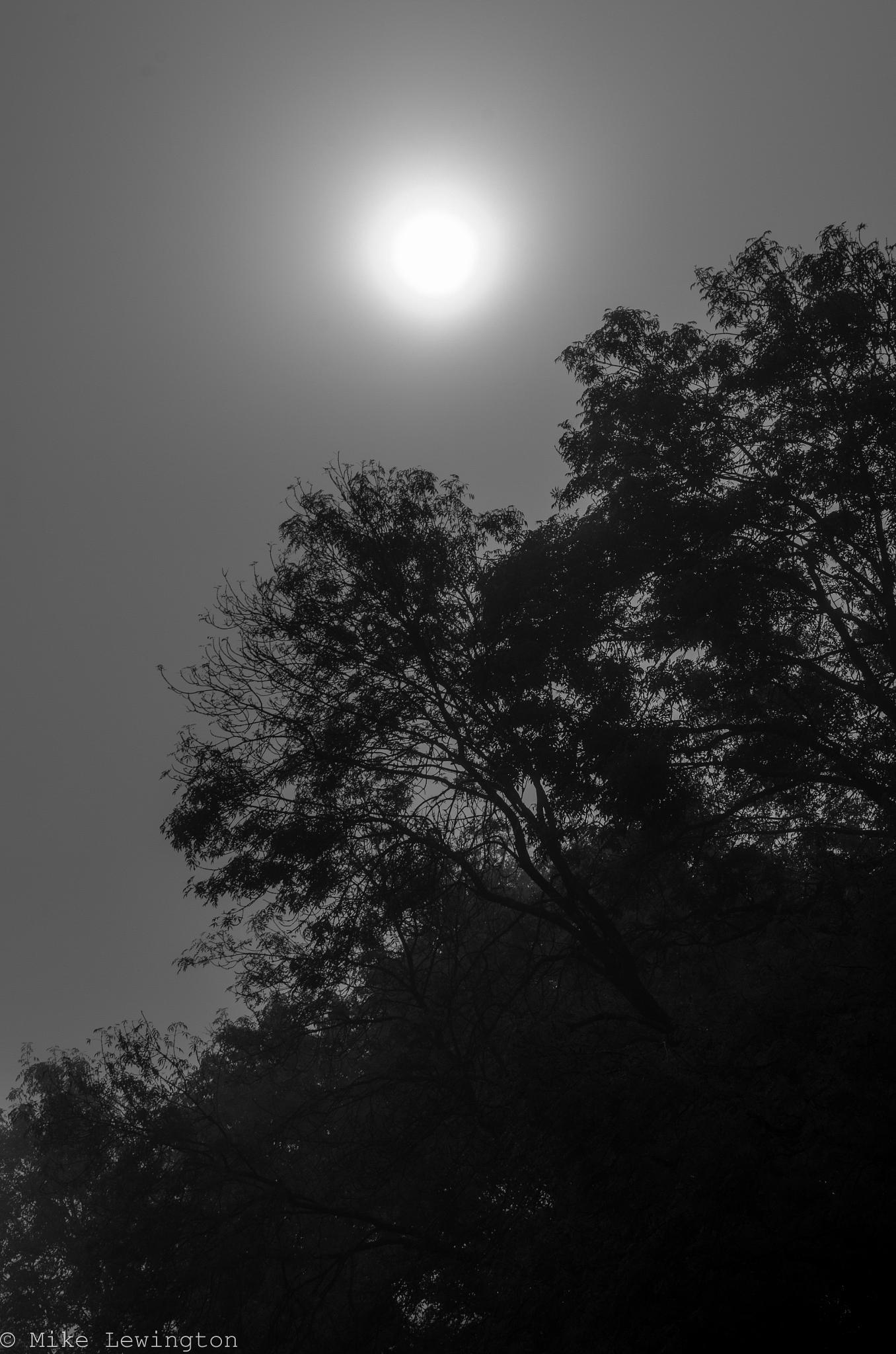 sun light by Mike Lewington