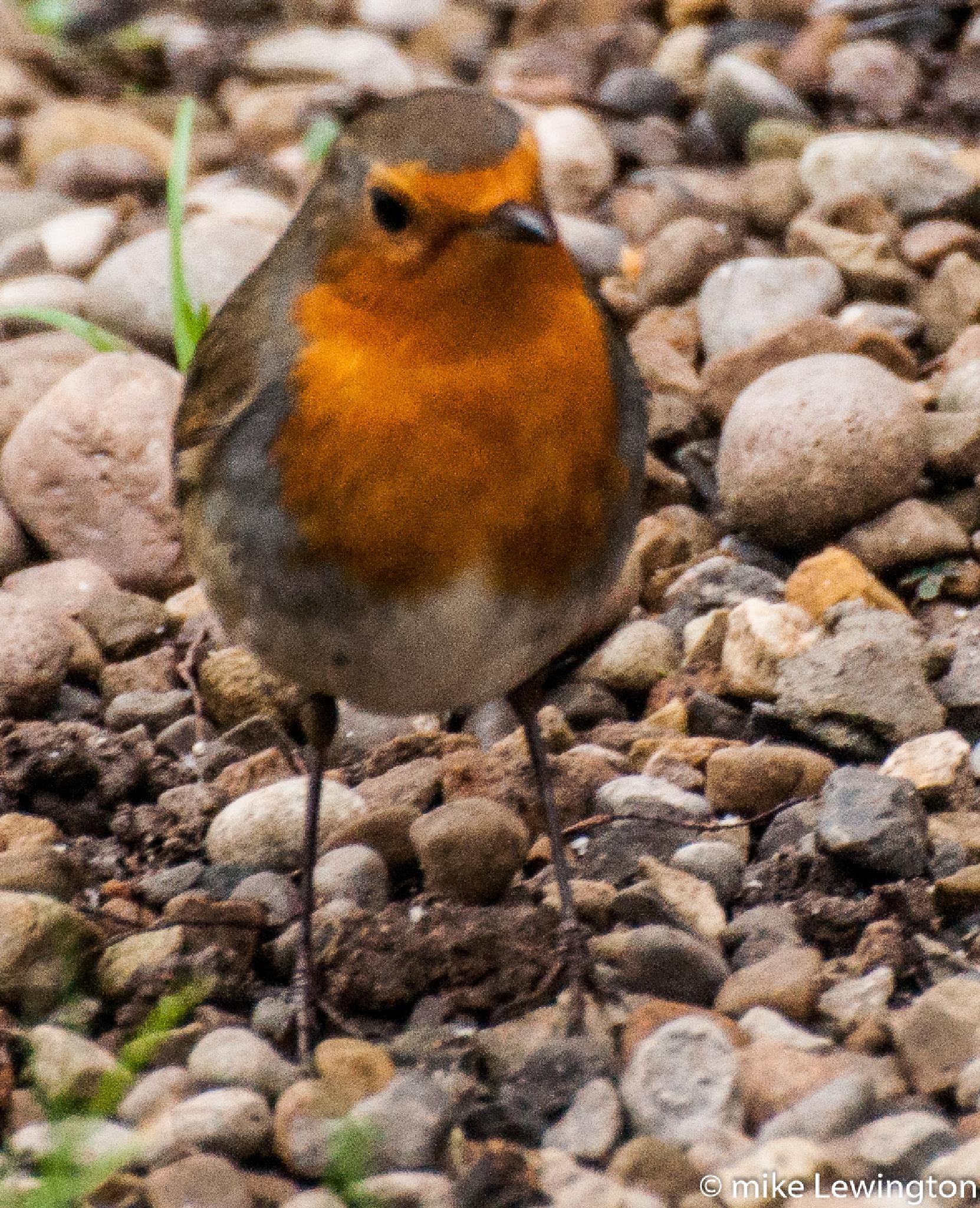 in the garden by Mike Lewington