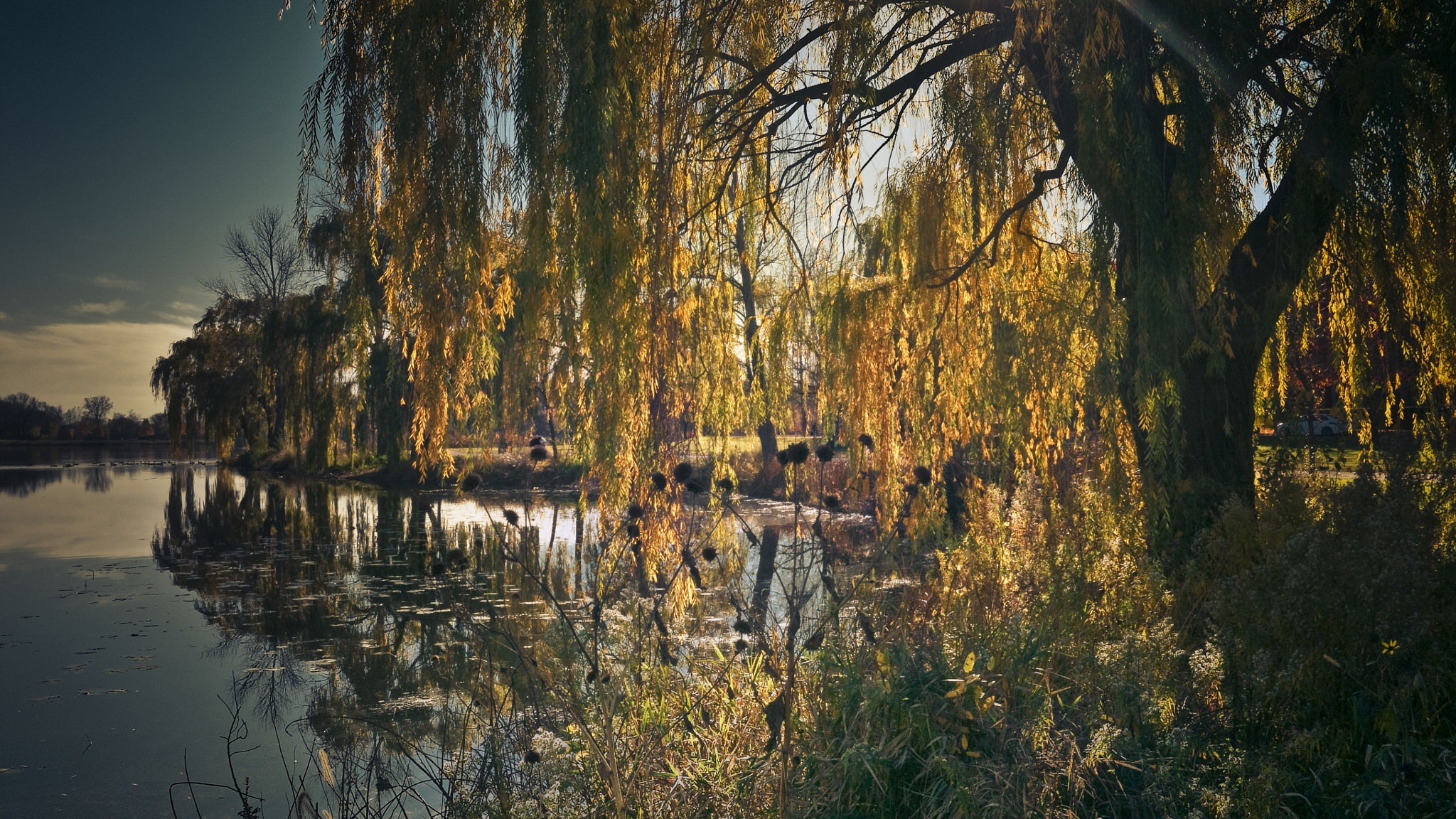 Lagoon and Willows  by Robert Henry
