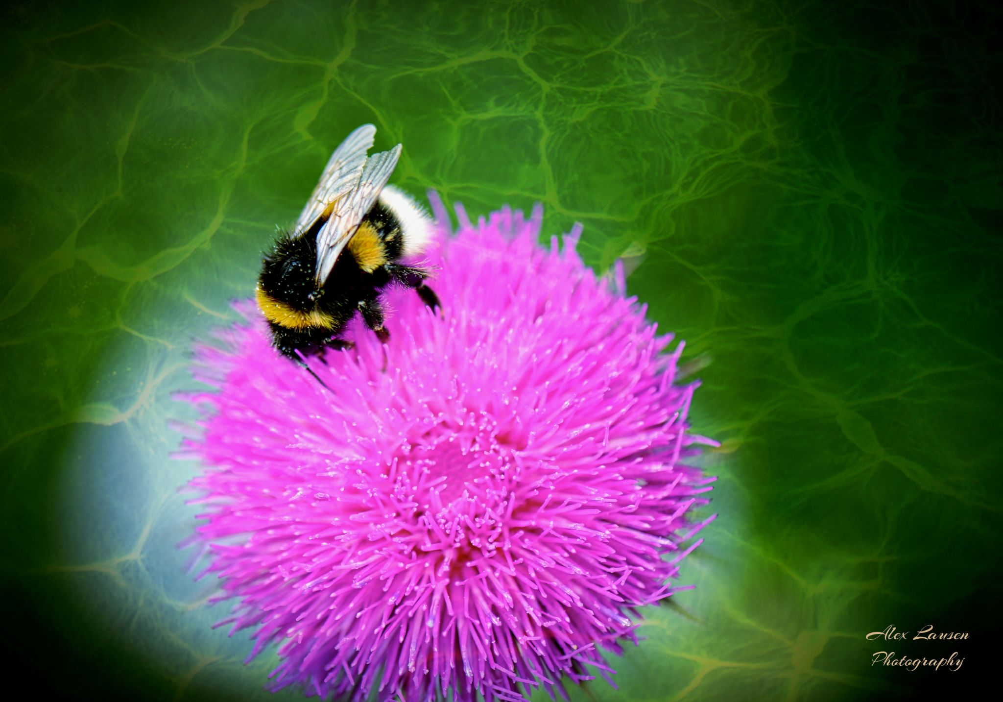 """"""" Bumble Bee and green water """" by Alex Lausen"""