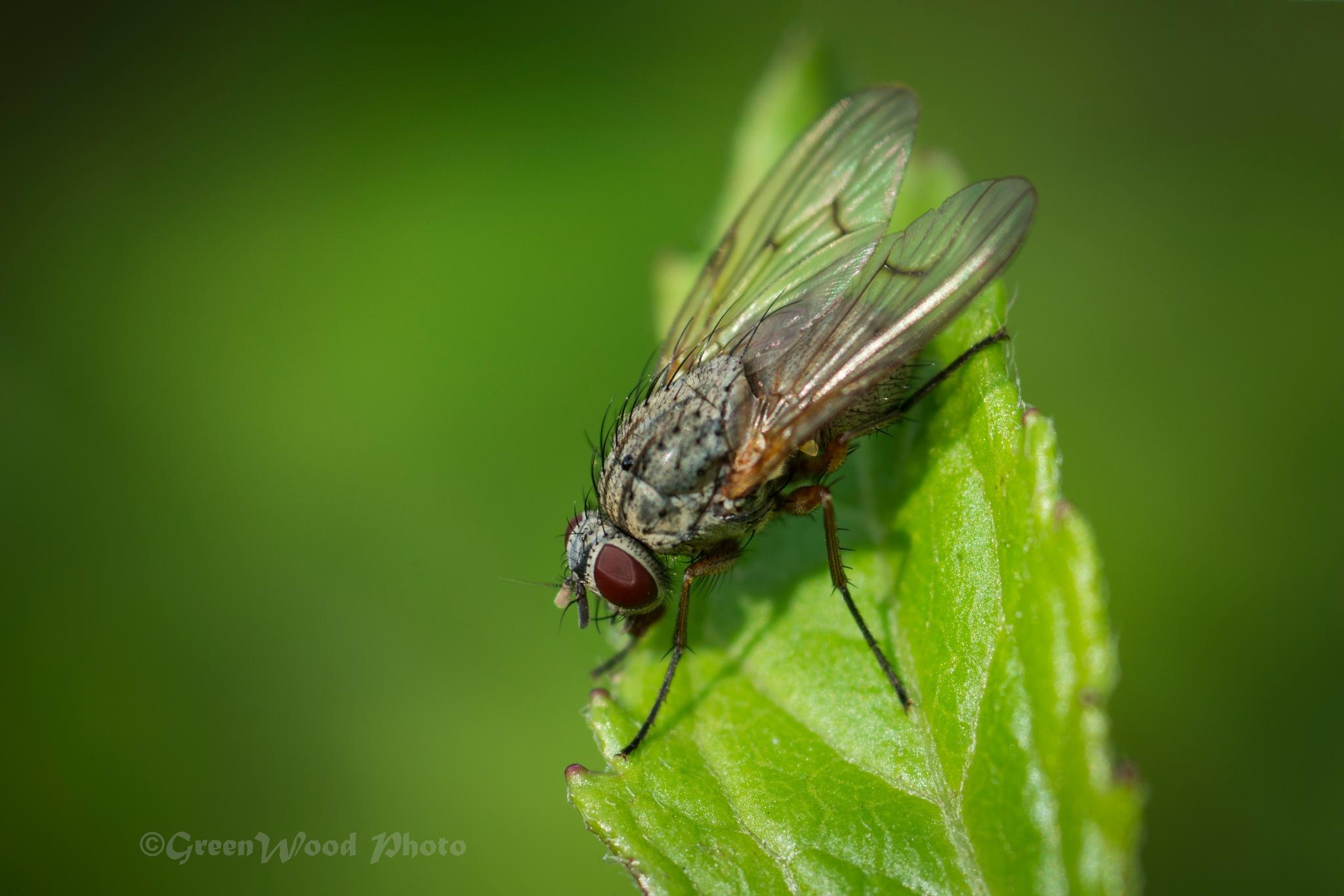Fly by Zoltán Grünvald