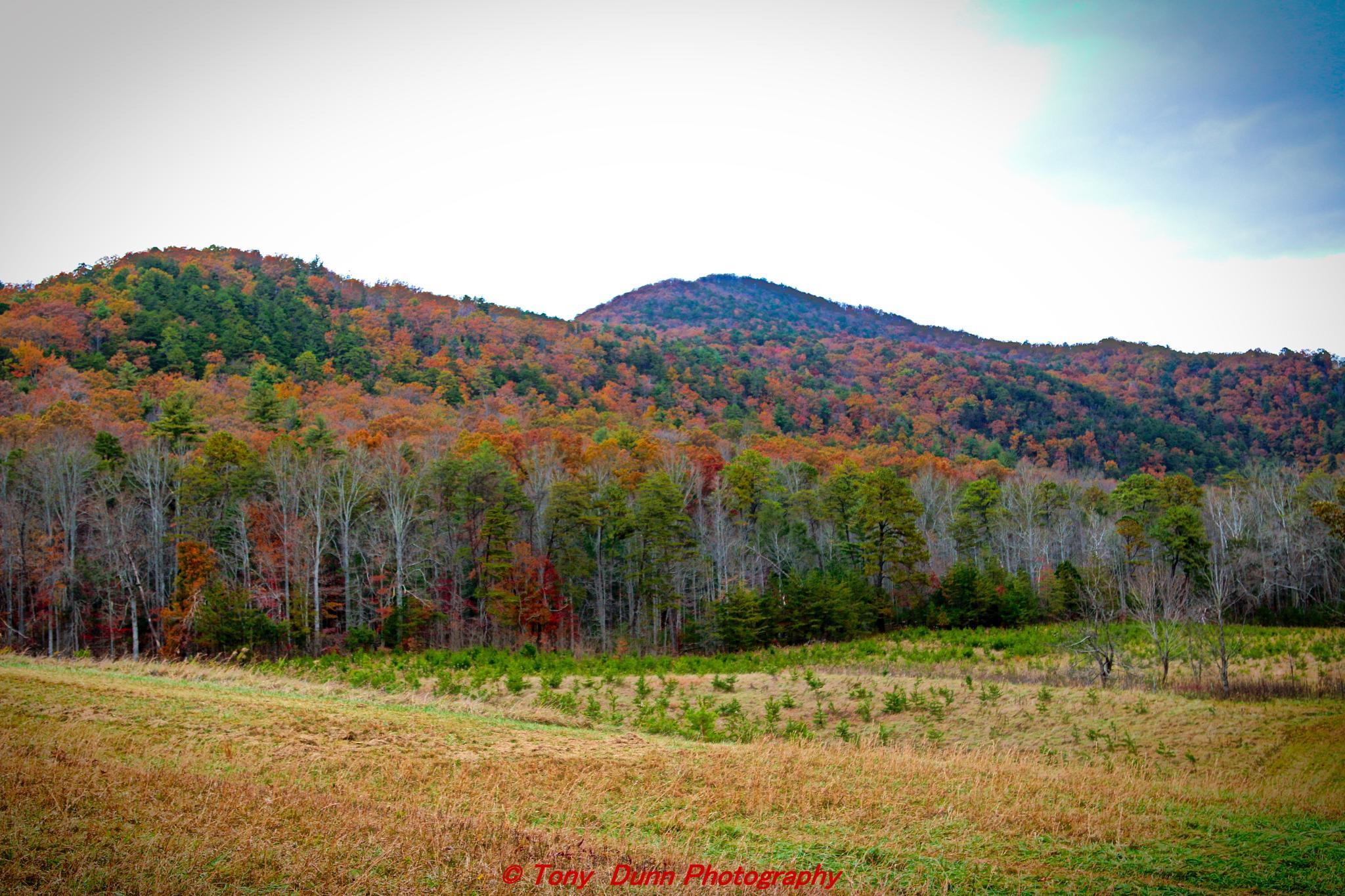 Fall Colors by Tony Dunn