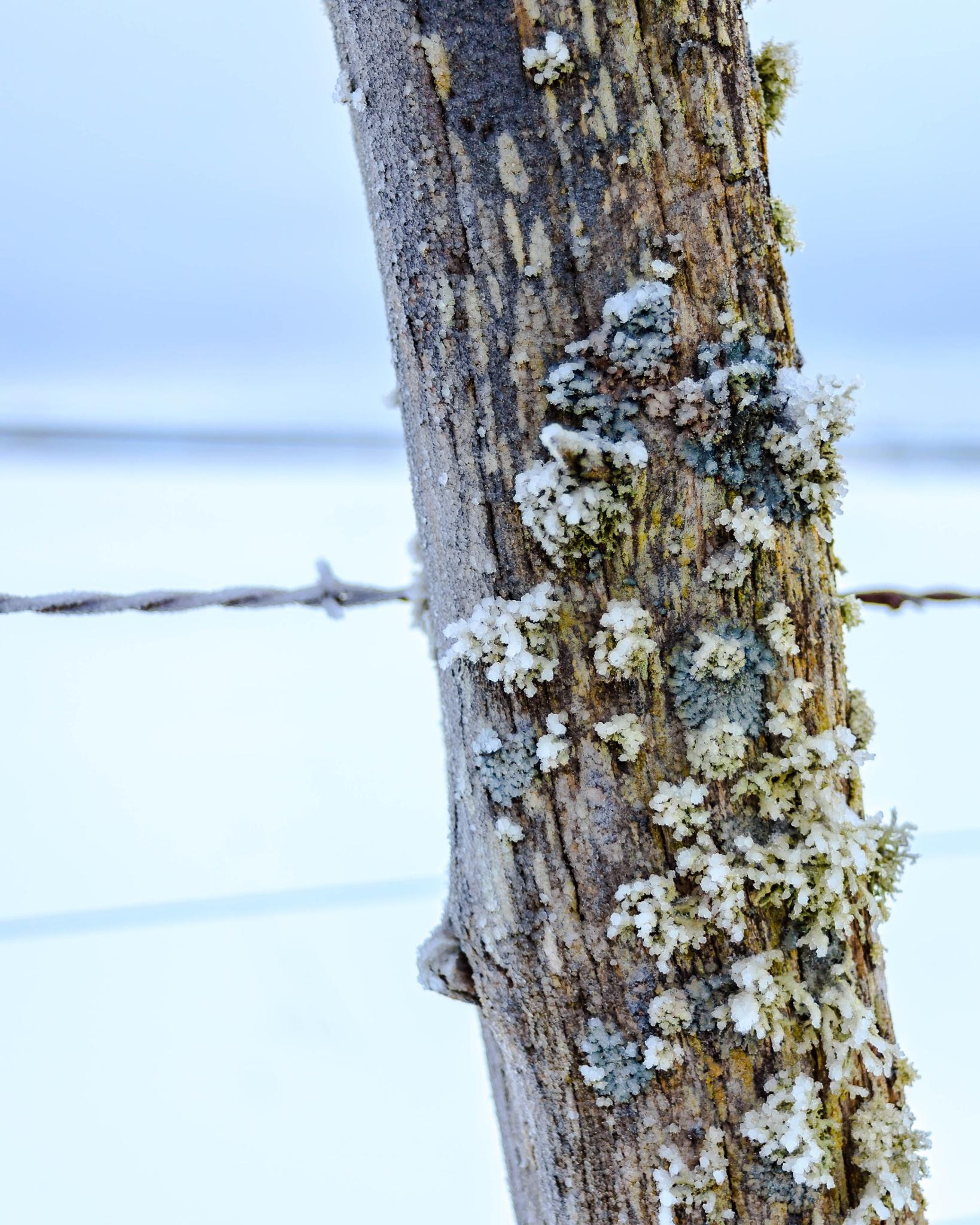 Ice on the fence by Luke Johnson