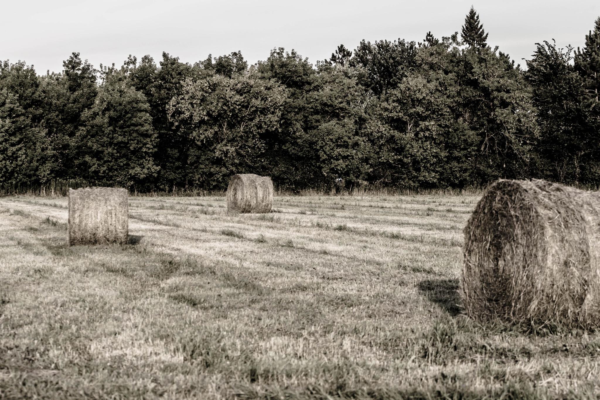 Round Bales by Luke Johnson