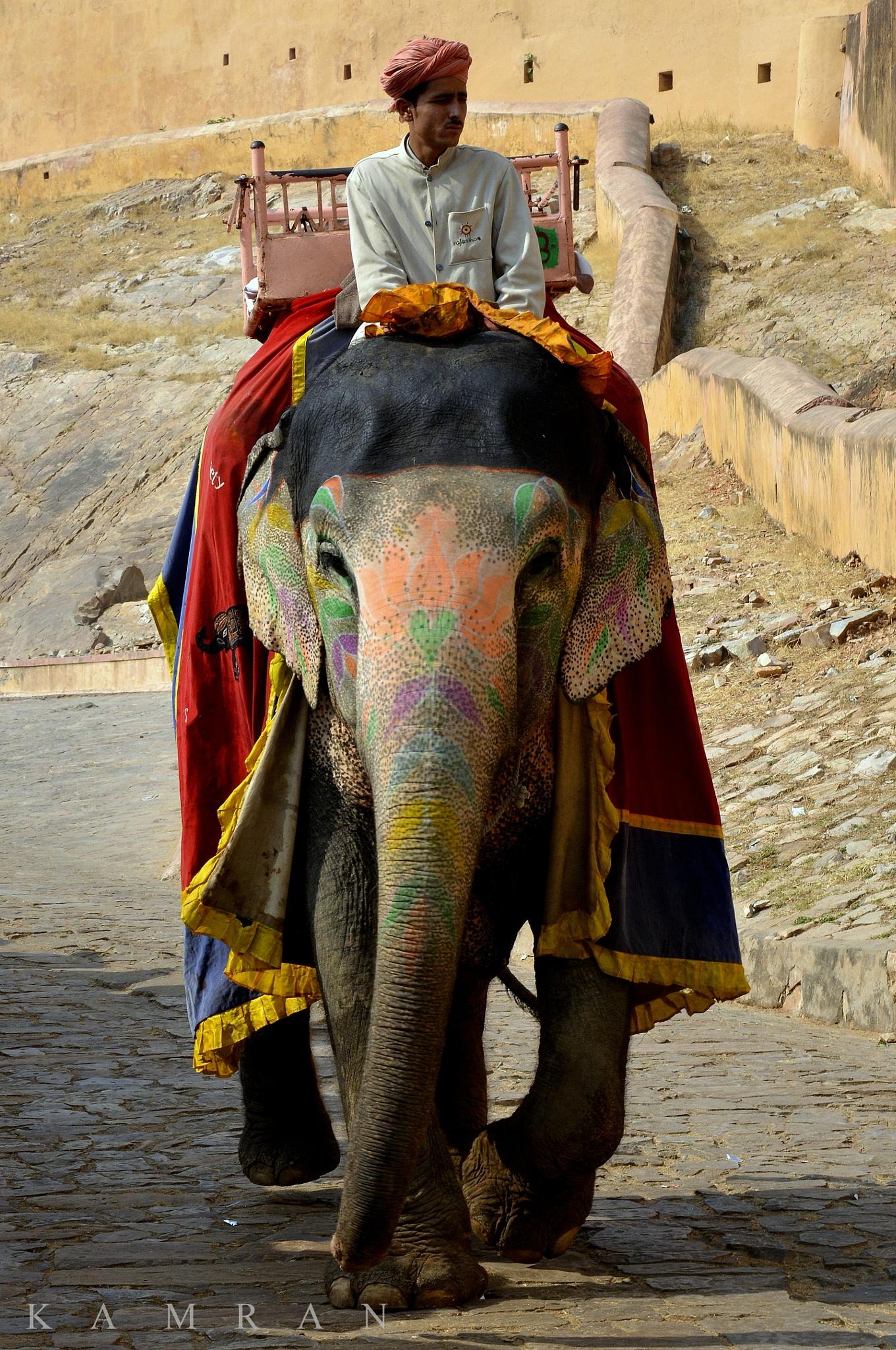 The Royal Ride by kamran