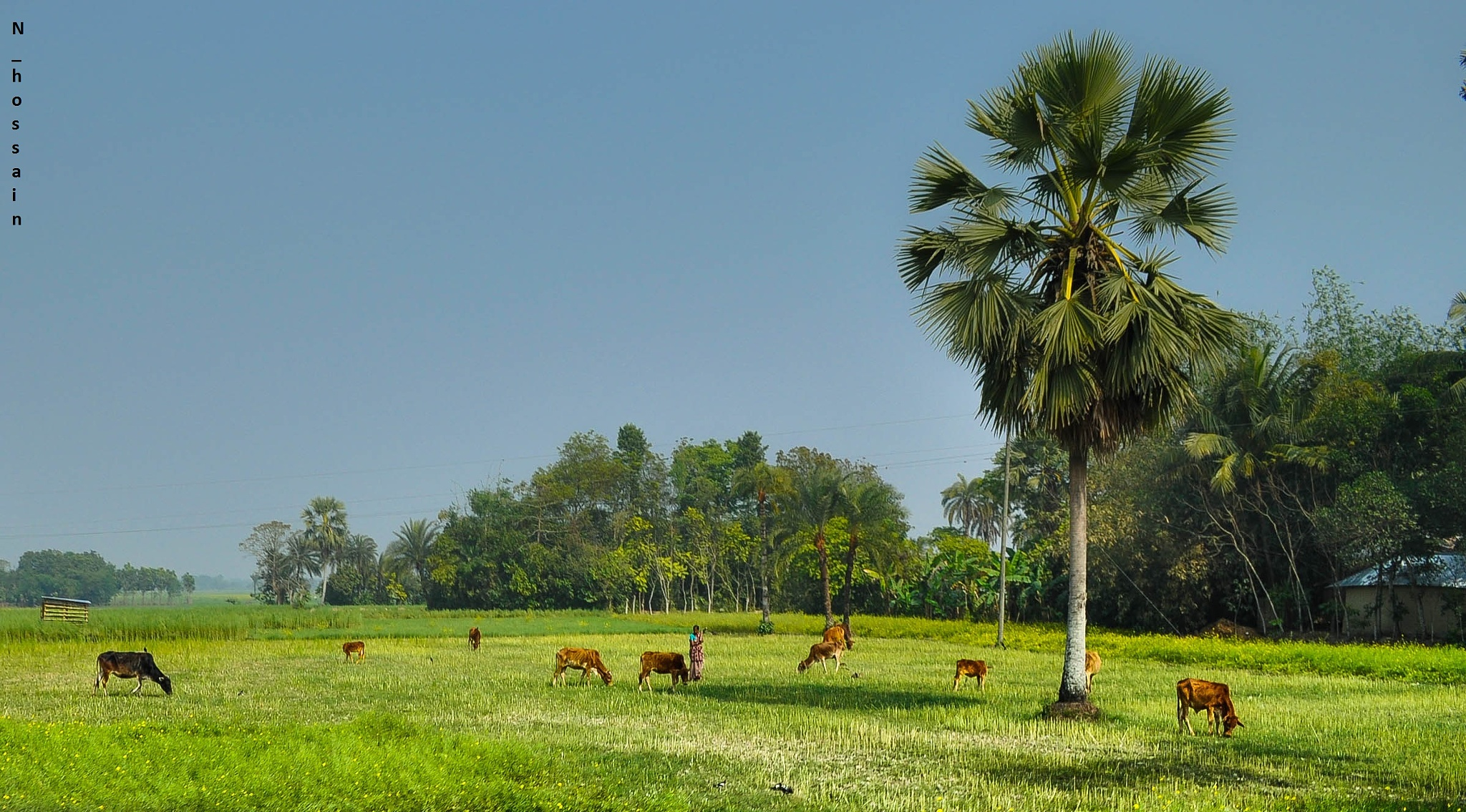 Life and Nature by Nazmul Hossain