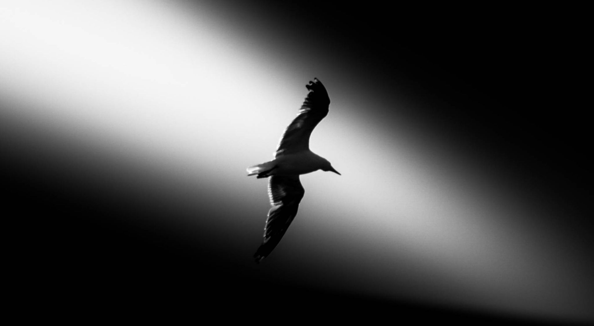 I ferret light   by Nazmul Hossain