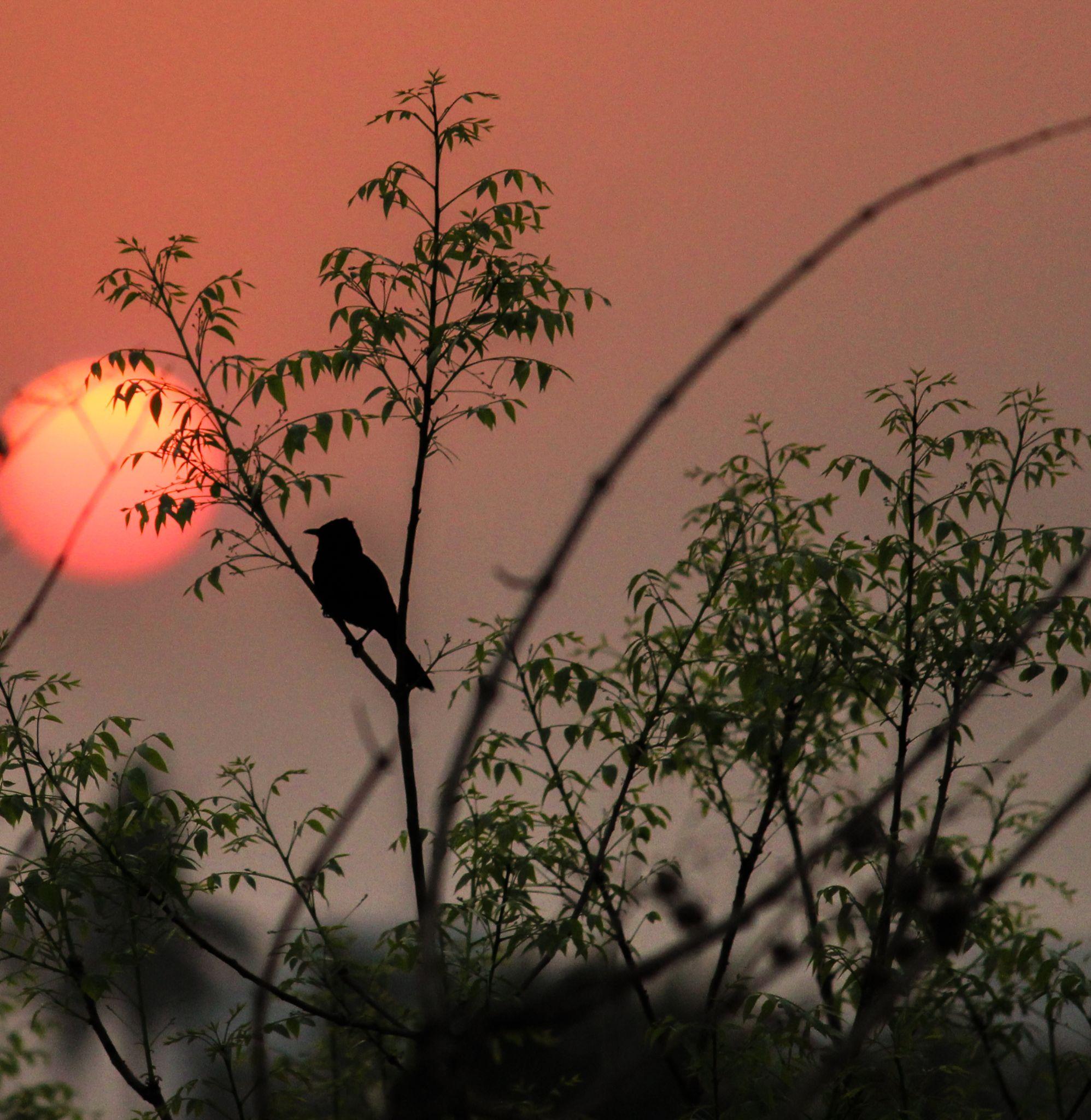 shadowlights  by Anirban Banerjee