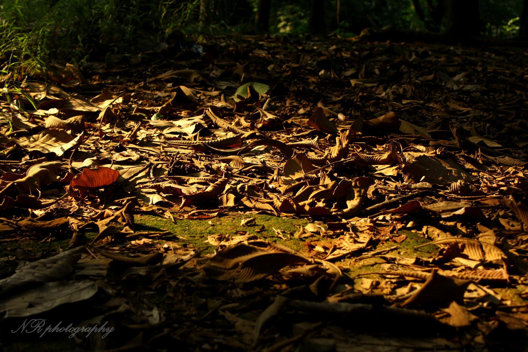 Leaf.... by Nasim Reza