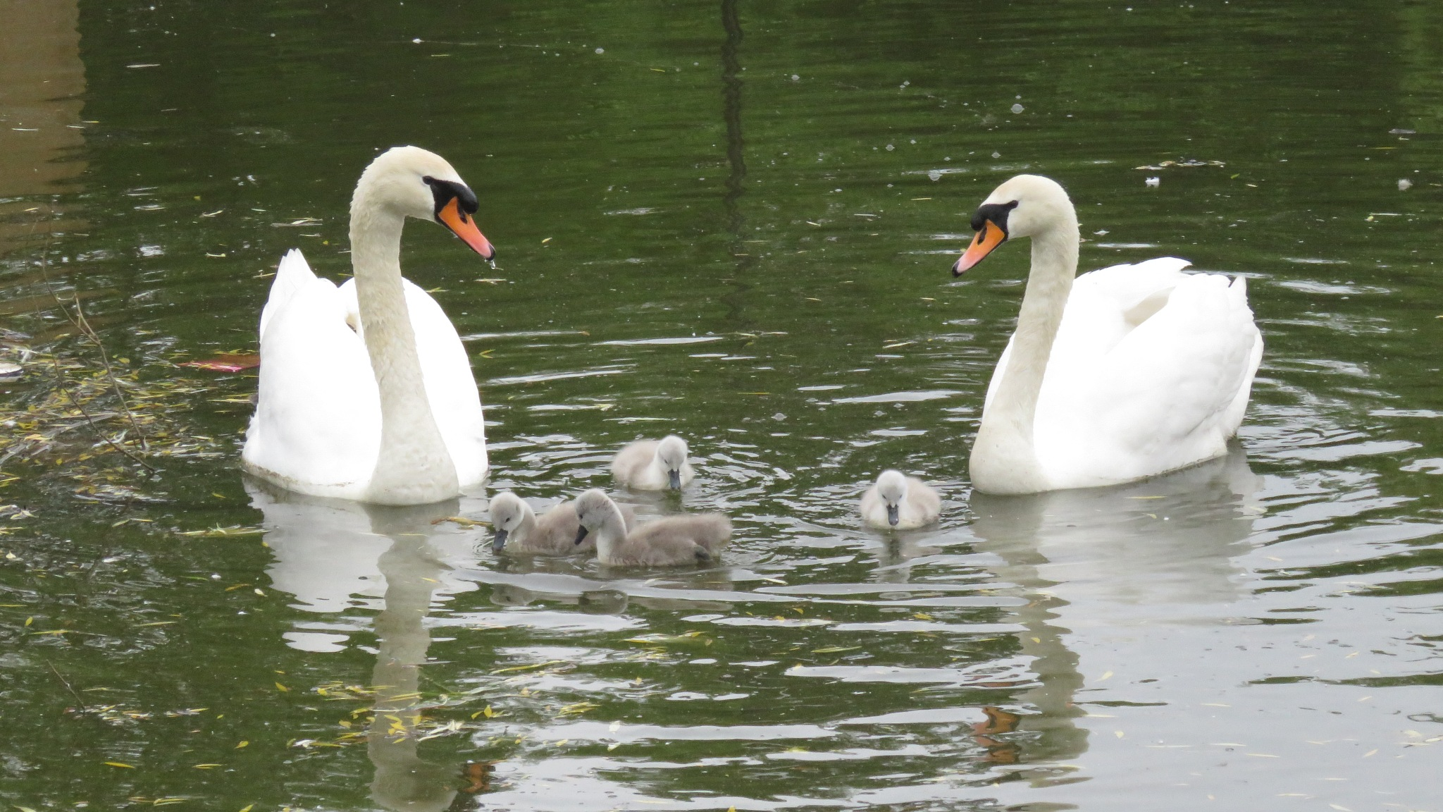 Family by Nige Photography