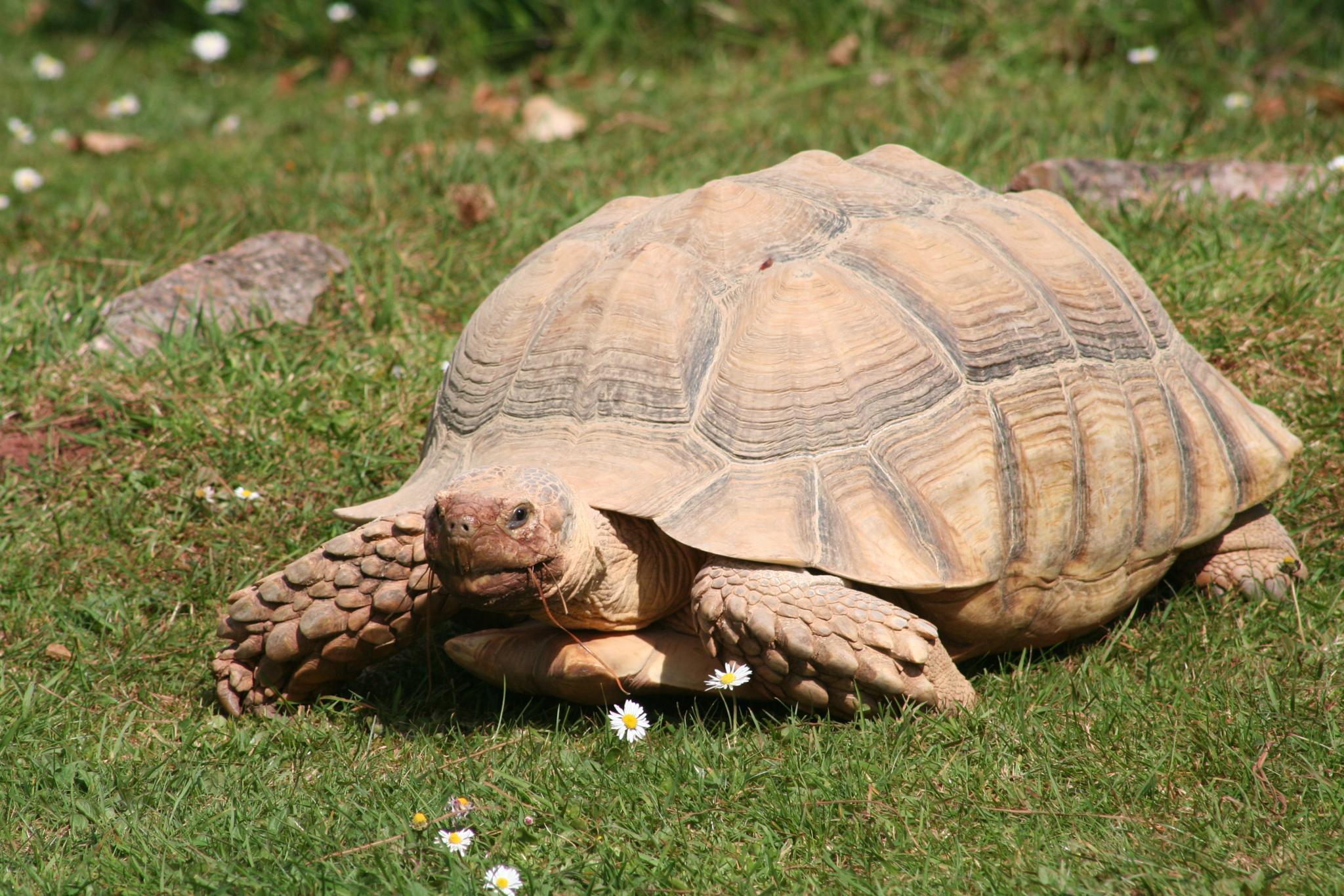 One big tortoise by Nige Photography