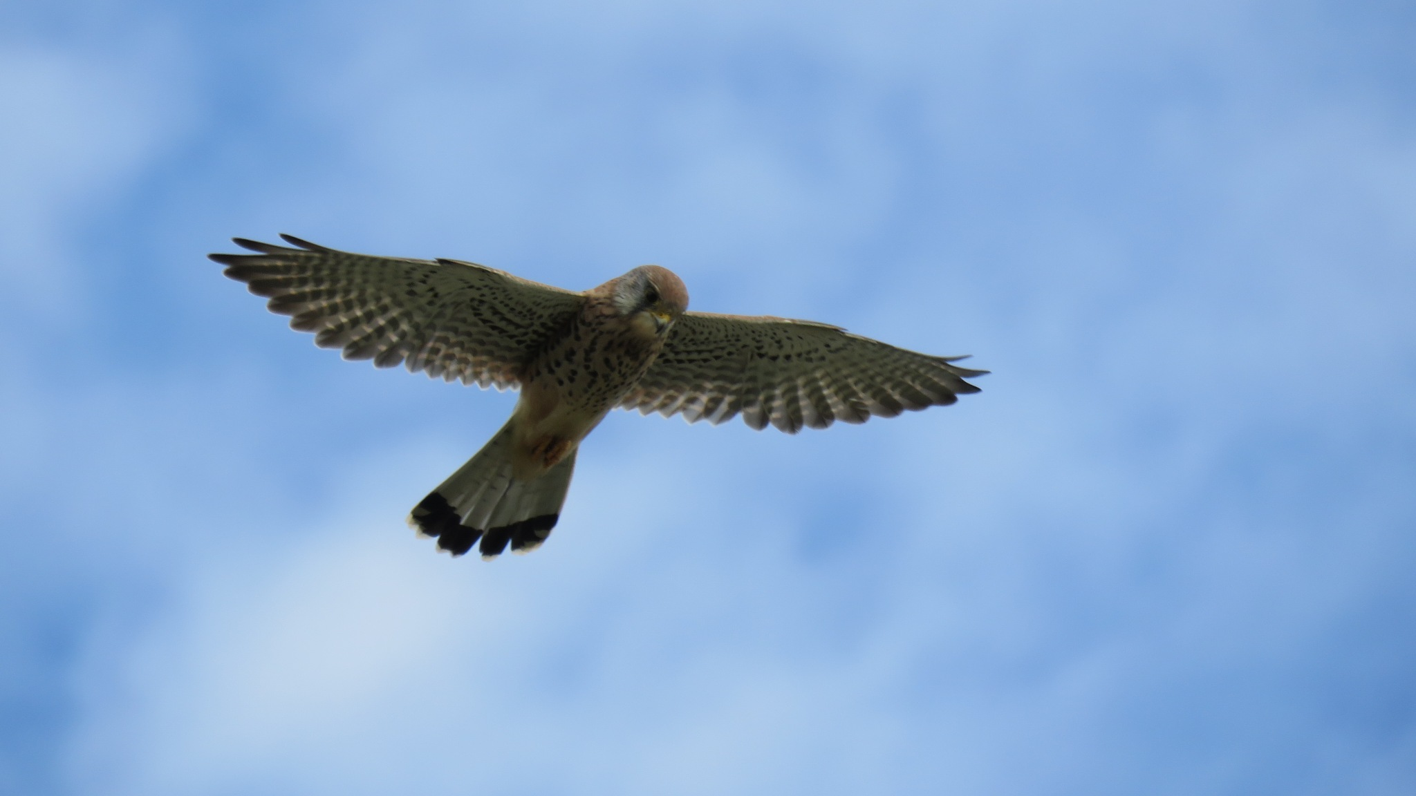 In Flight by Nige Photography