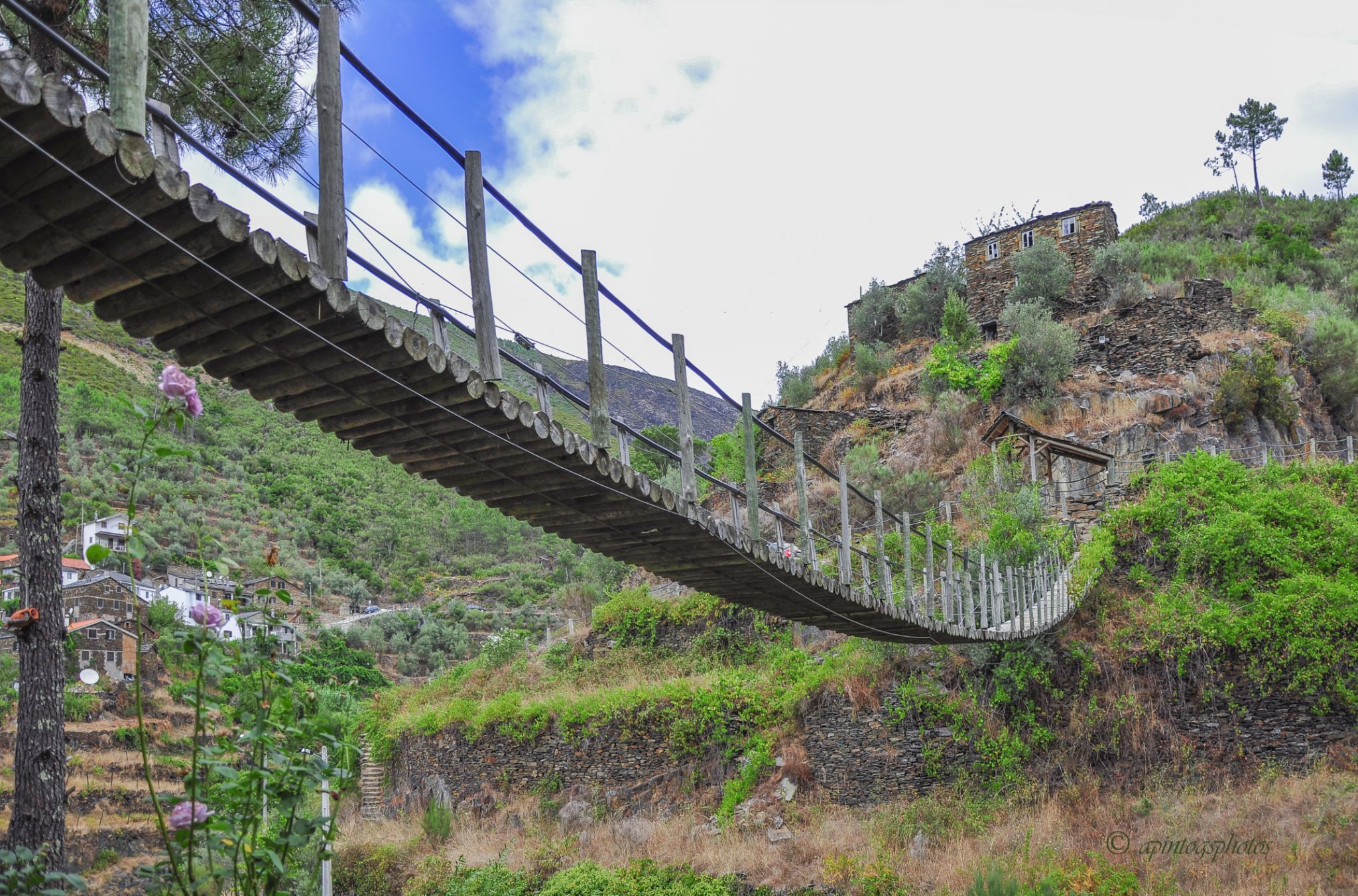 hanging bridge by apintogsphotos