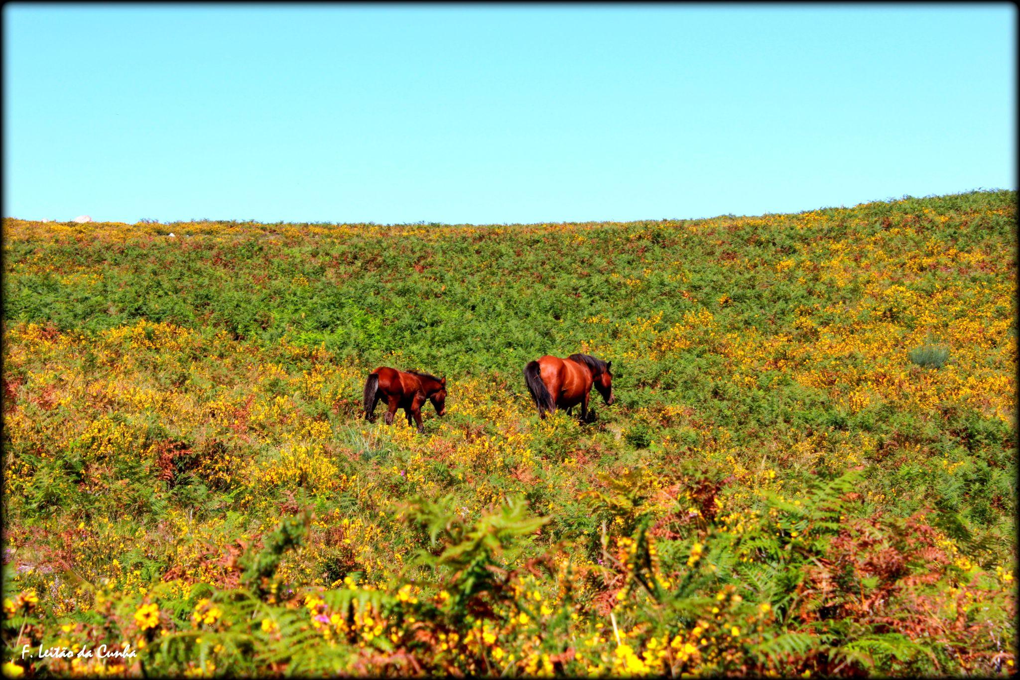 Wild Horses by Fernando Leitão da Cunha