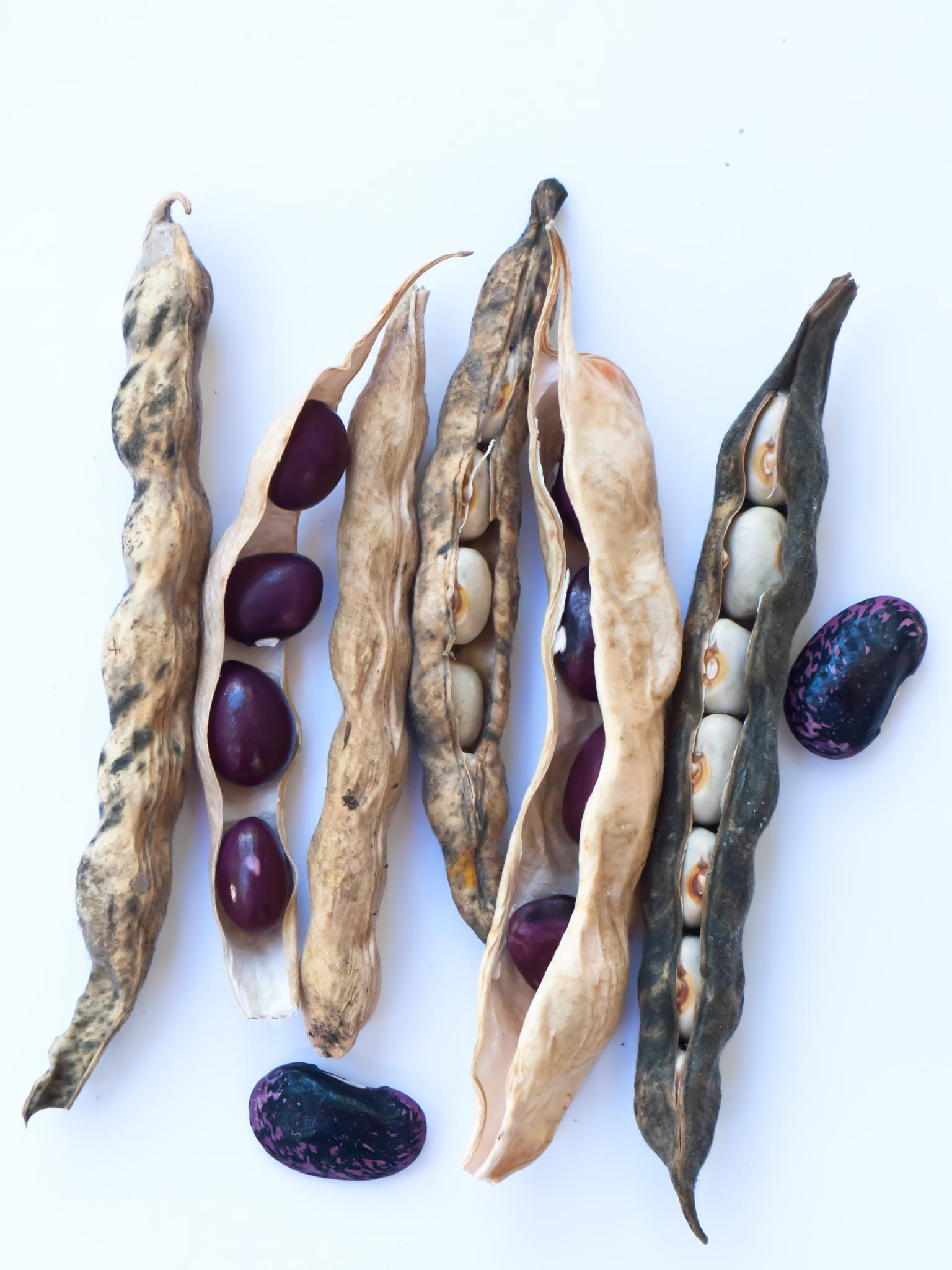 Various shell beans by Leann