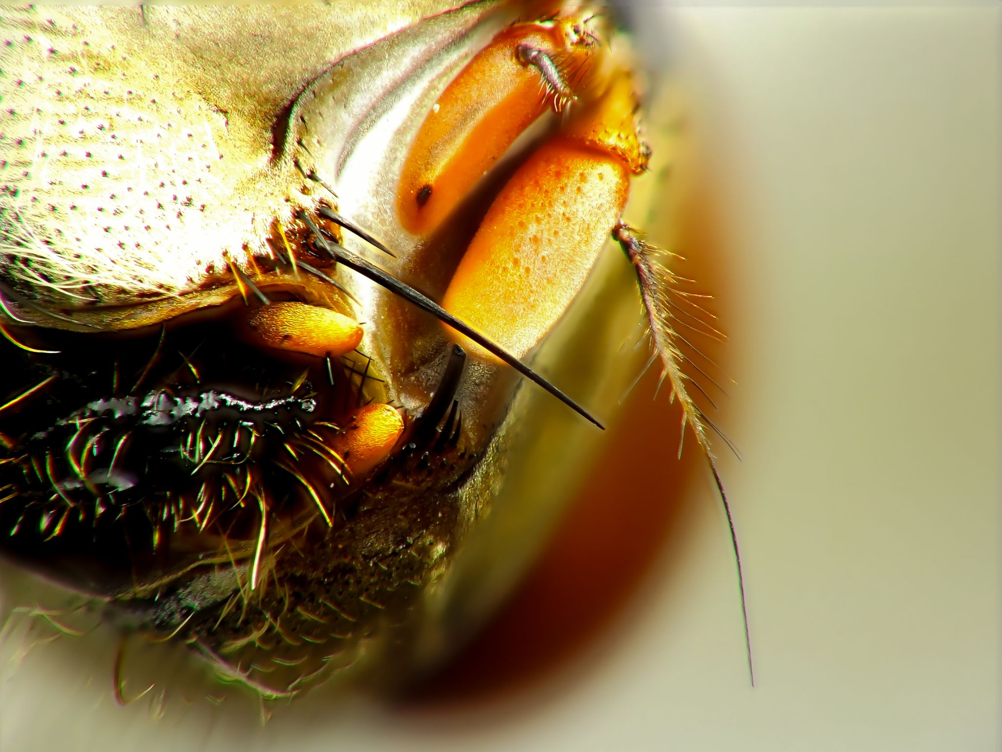 Fly, mosca doméstica by Rui Oliveira Santos