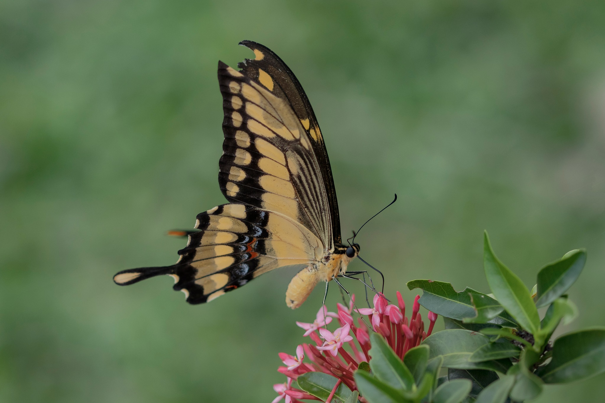 Butterfly and flowers by Rui Oliveira Santos