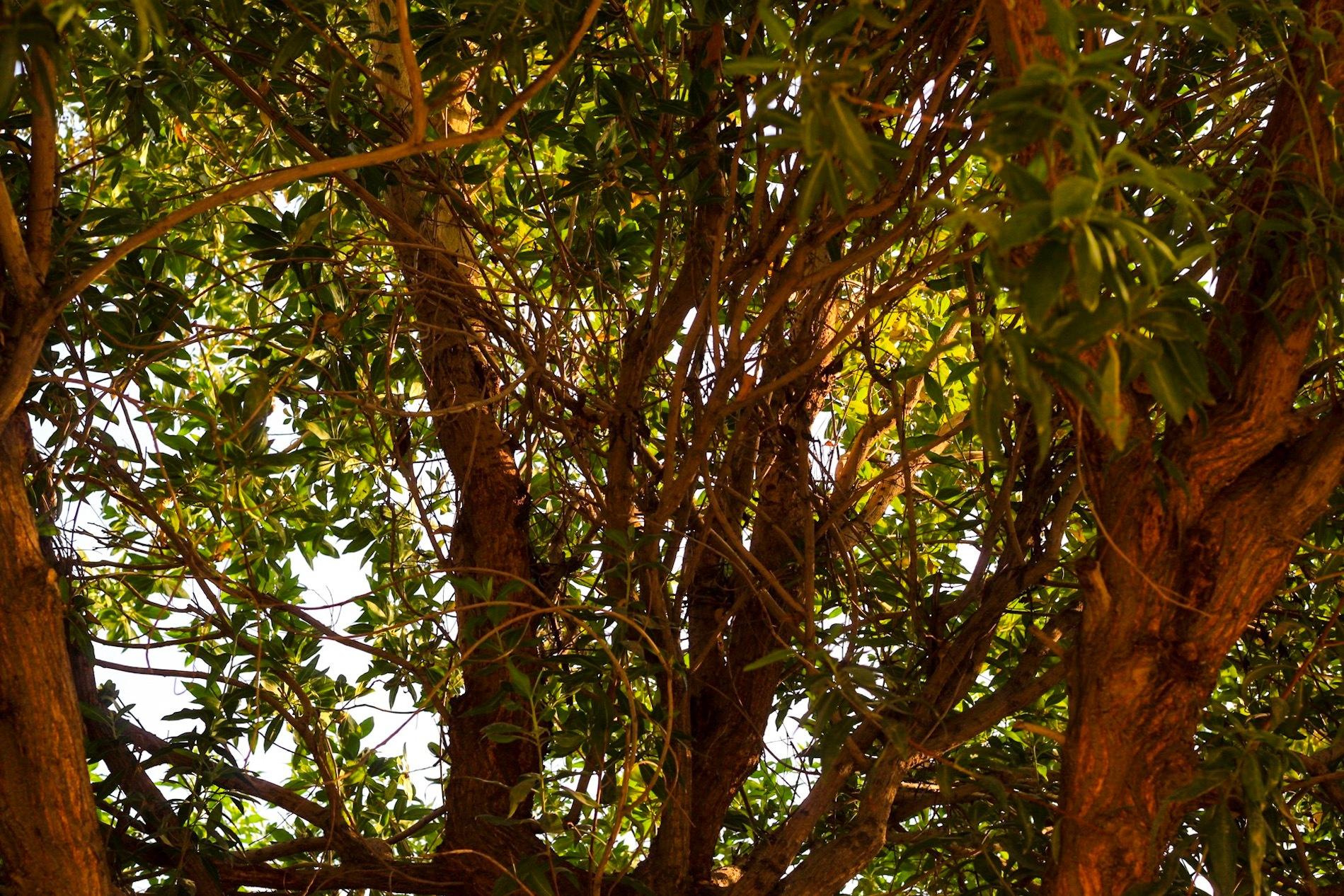 Tree and Shade by Mazim. Varikodan