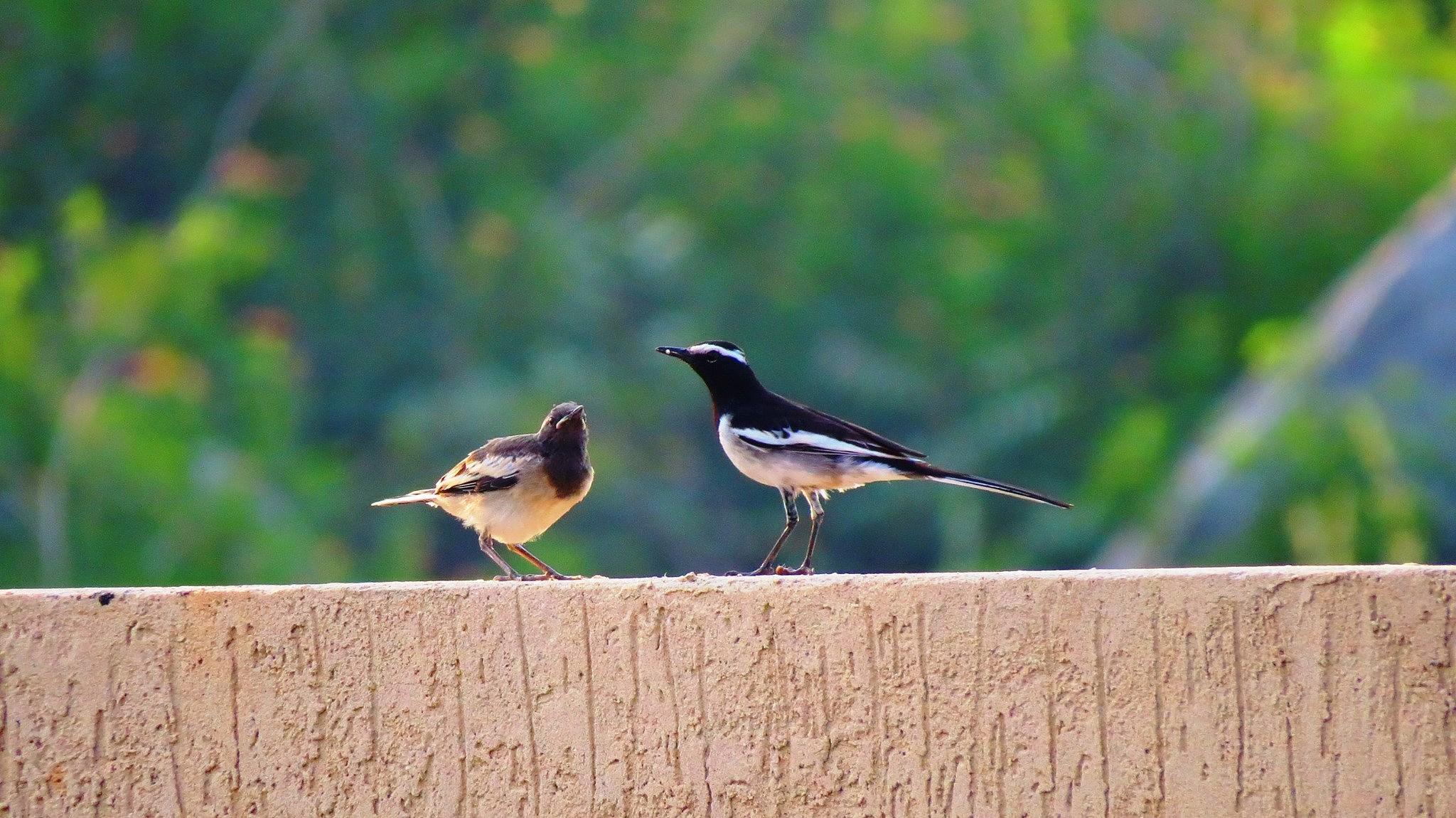 Untitled by pushpita balakrishnan