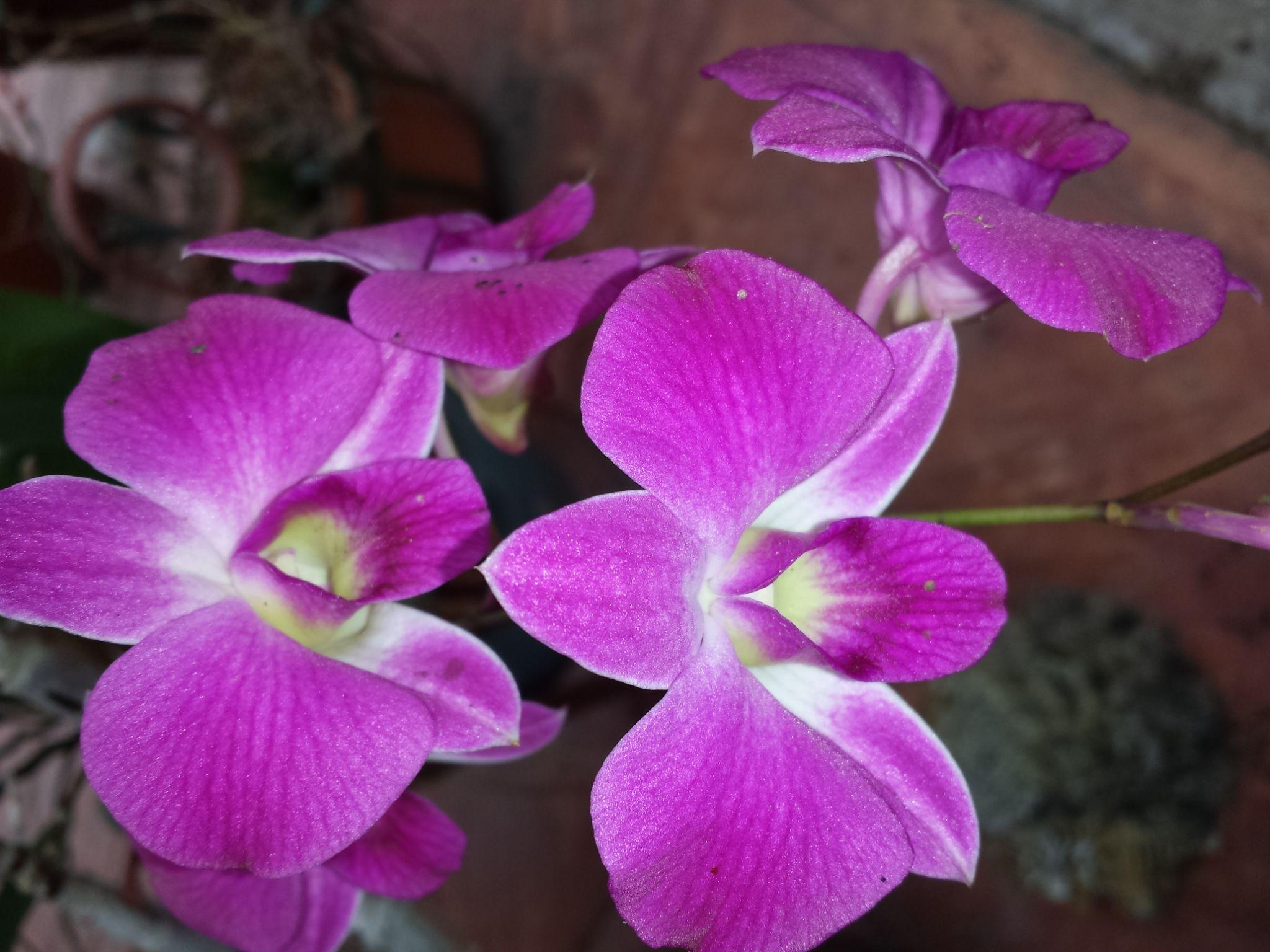 Purple Orchid by mystykangel