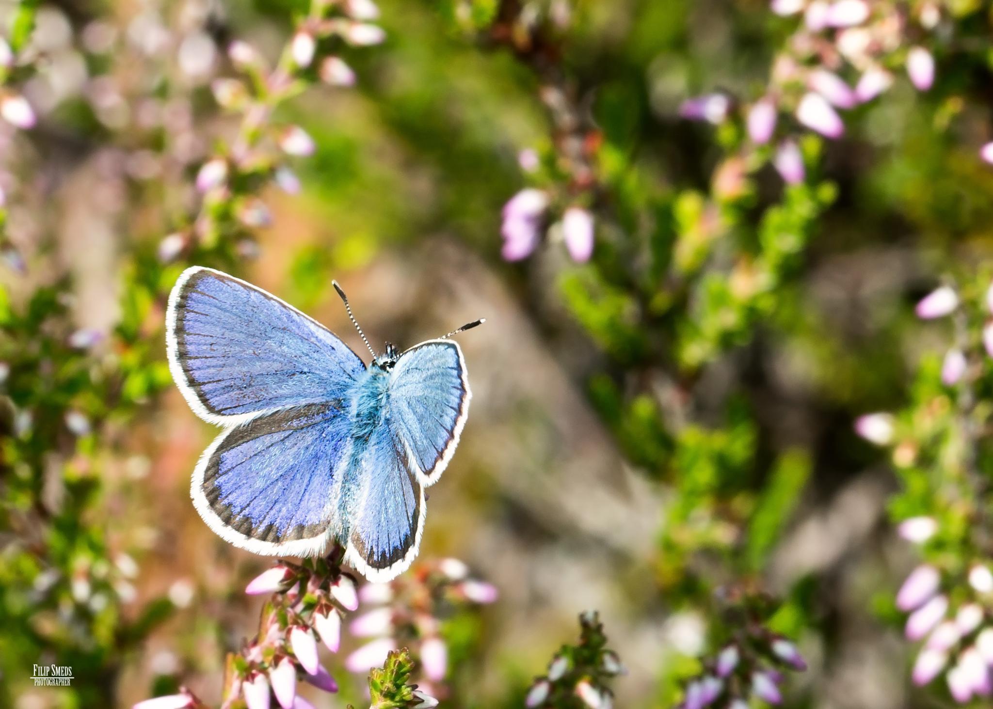 Blue by Filip Smeds