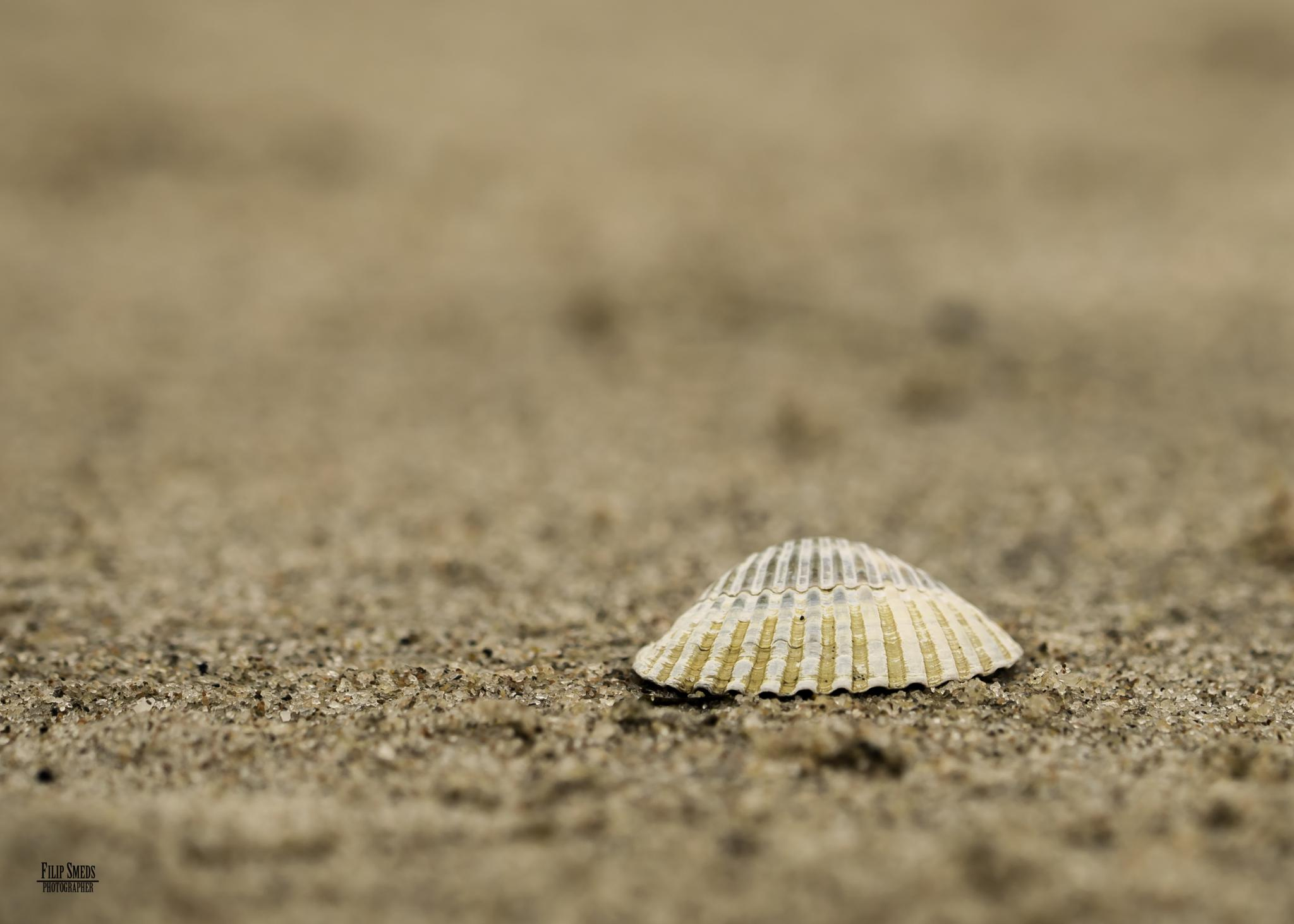 At the beach by Filip Smeds