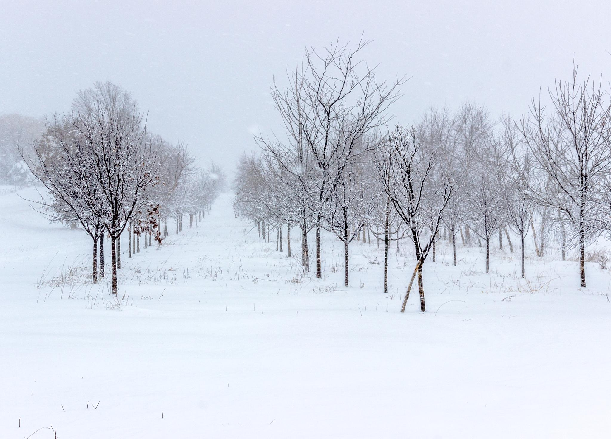 Snow Storm In Iowa #2 by Pete Hendley Photography