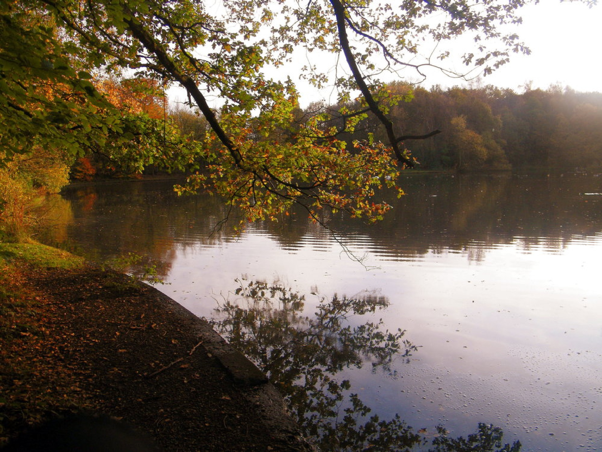 Shades  of  autumn by gordon simpson