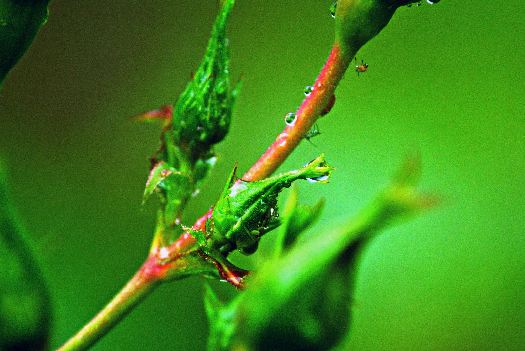 natural  teardrop by gordon simpson