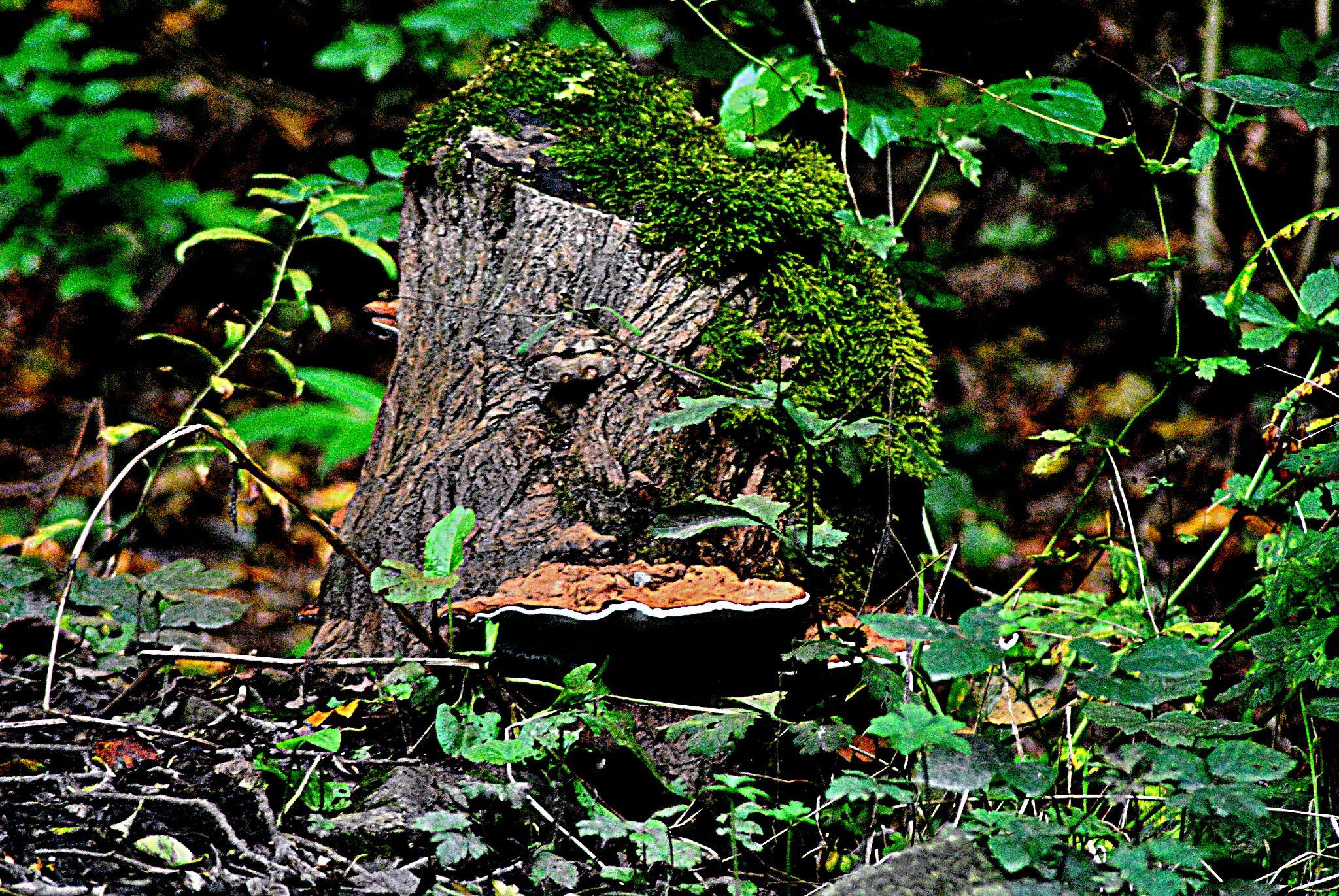 Sign  of  autumn by gordon simpson