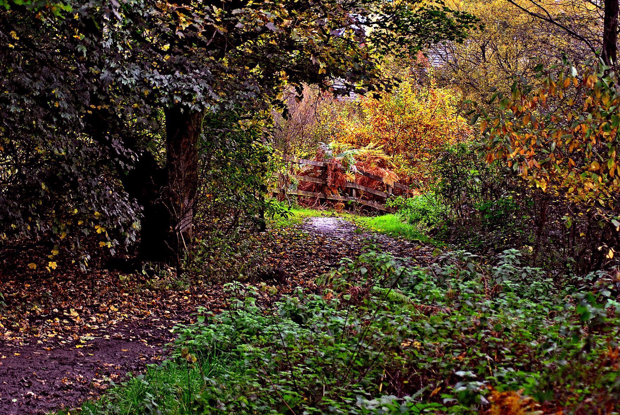 Autumn  at  Oldham by gordon simpson