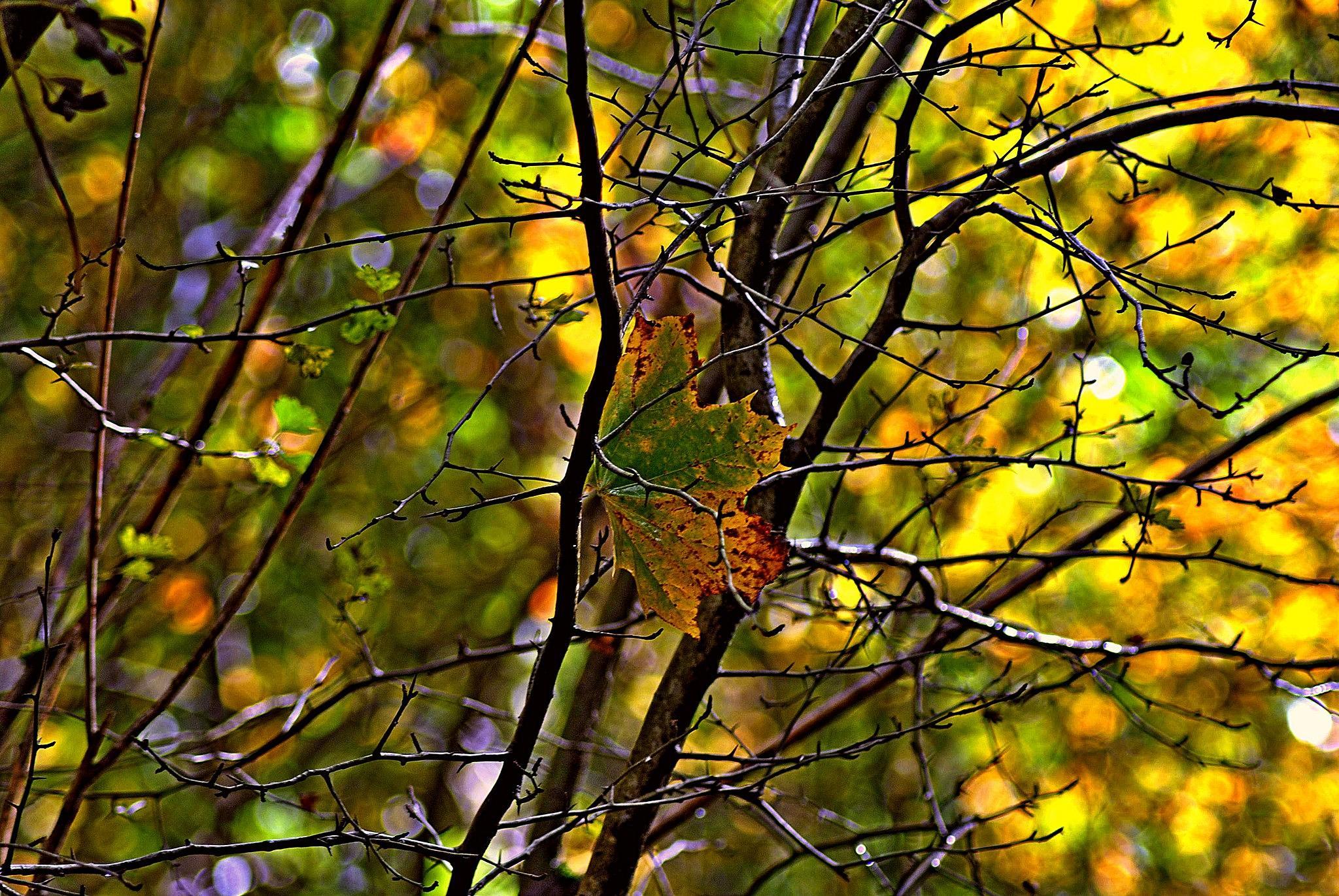 Lone  leaf by gordon simpson