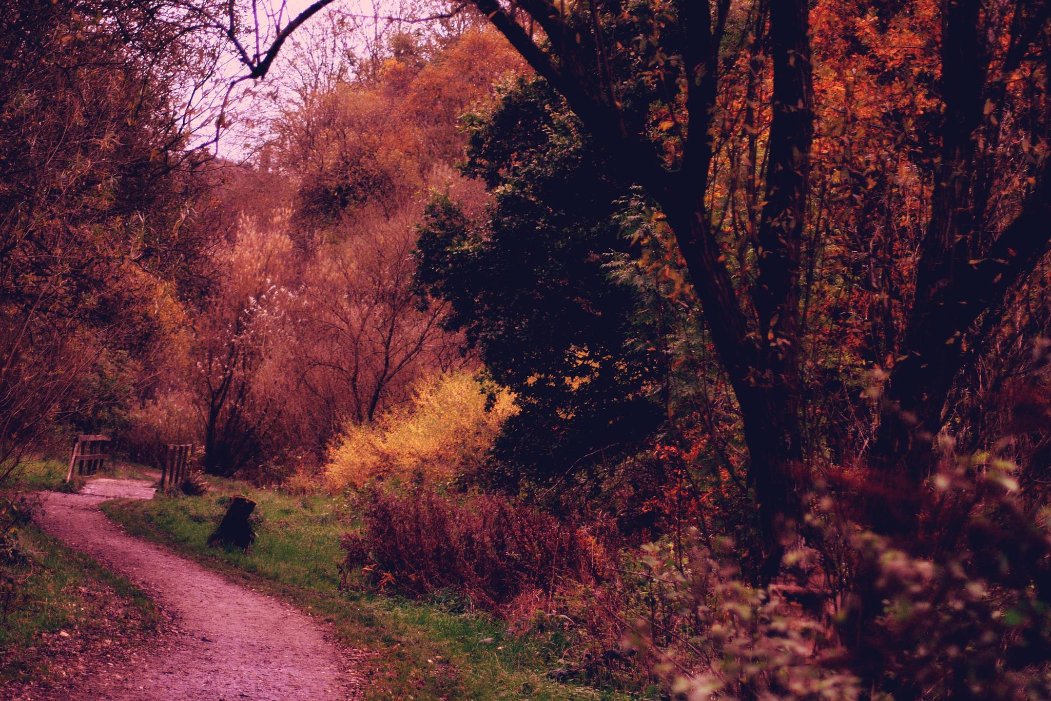 Autumn  invitation by gordon simpson