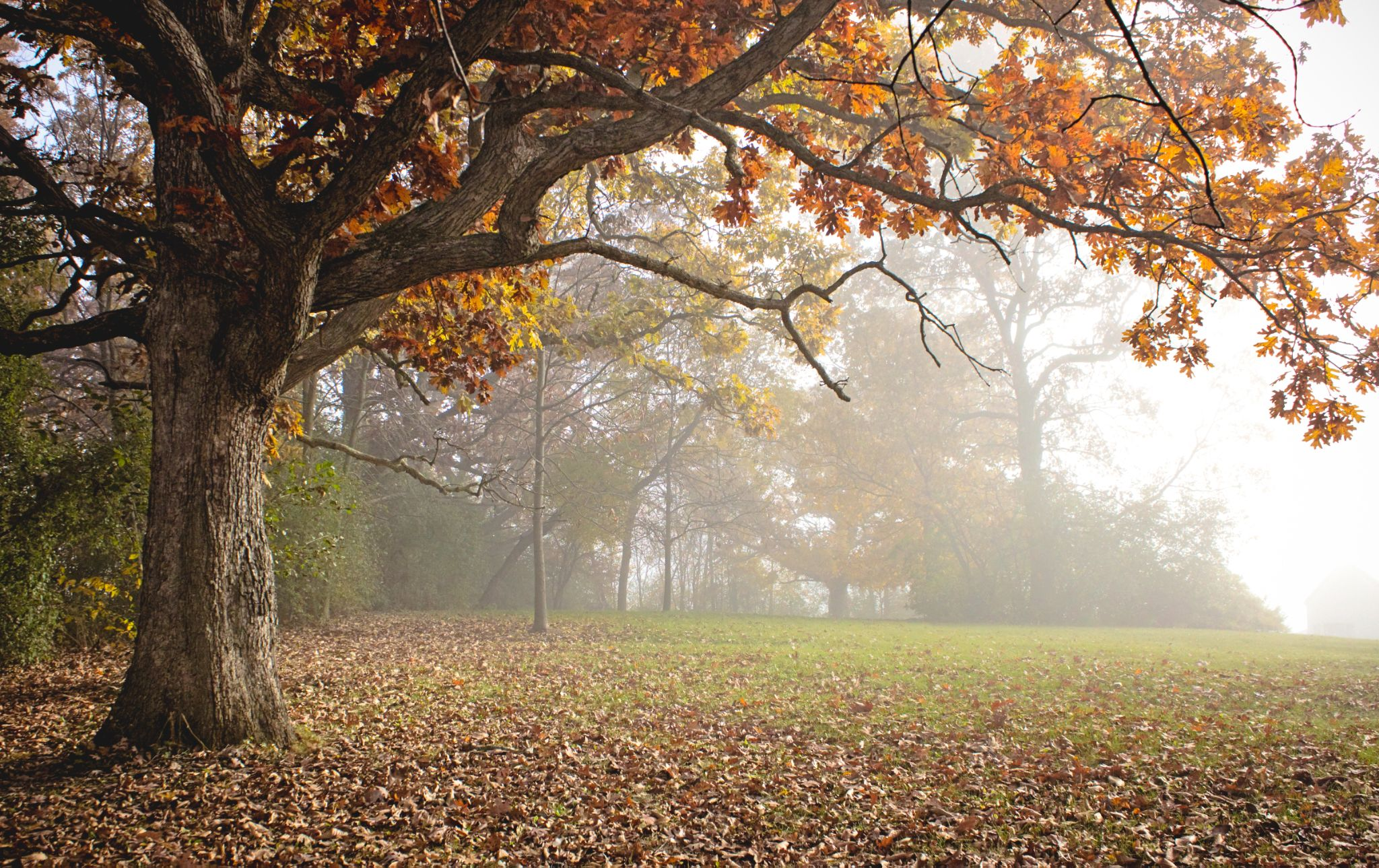 Autumn Fog by Rachel Camp