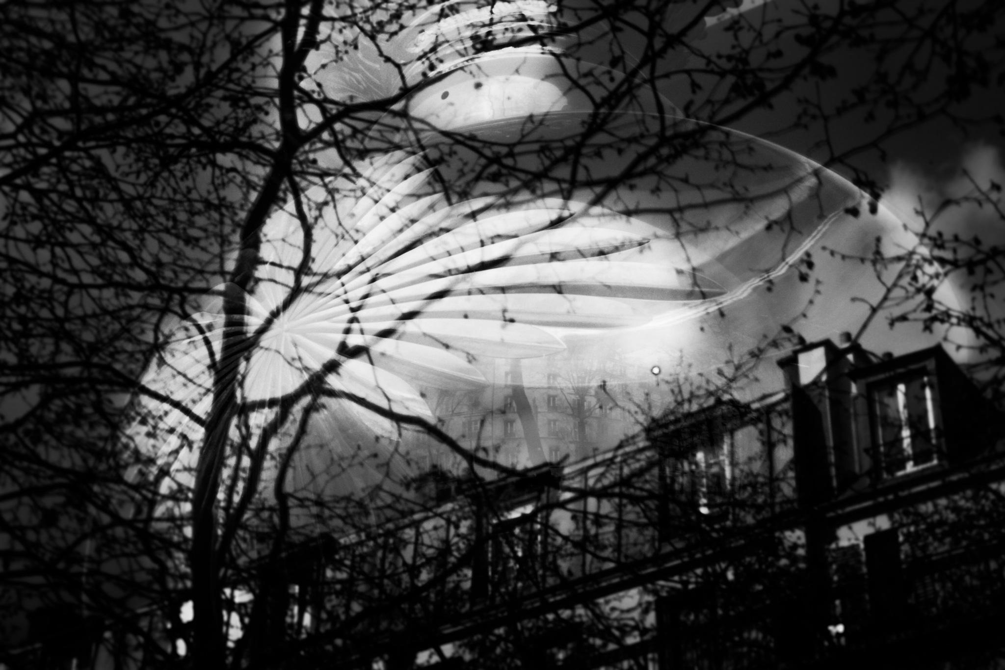 PARIS by Ariel Piluso
