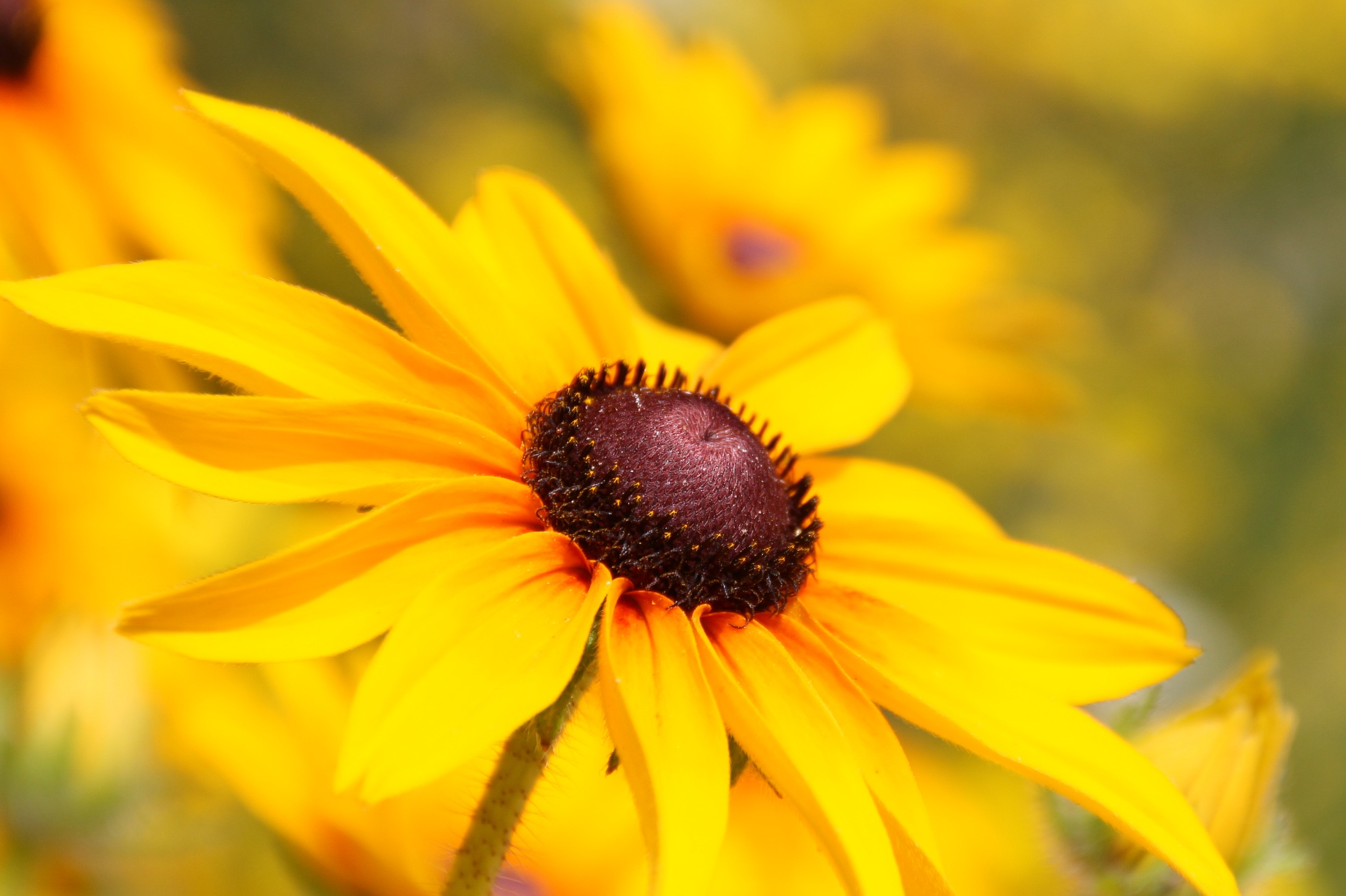 yellow flower by sonjajonkhout