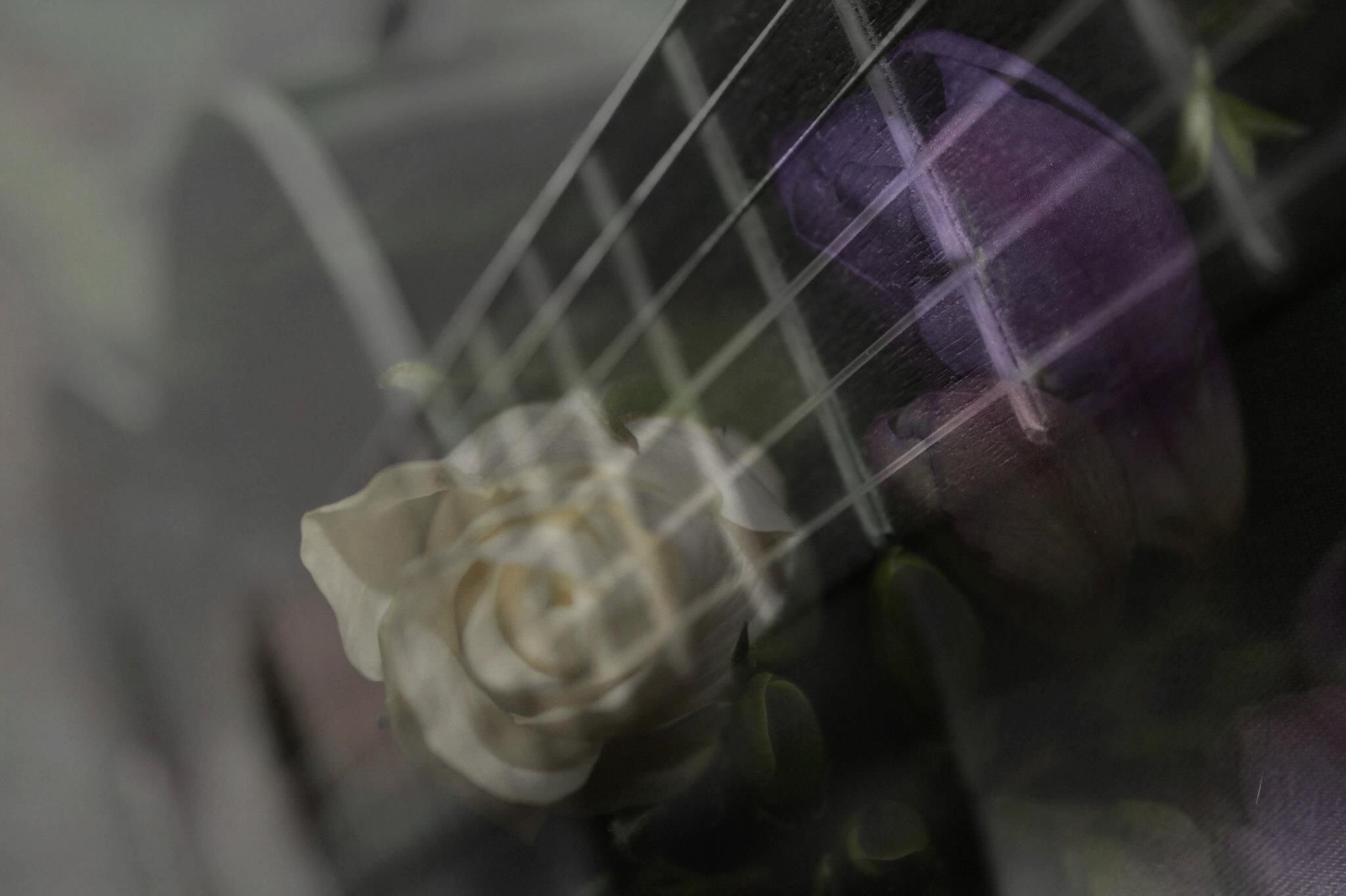 Double Exposure Musical Petals by Charlie Greaves
