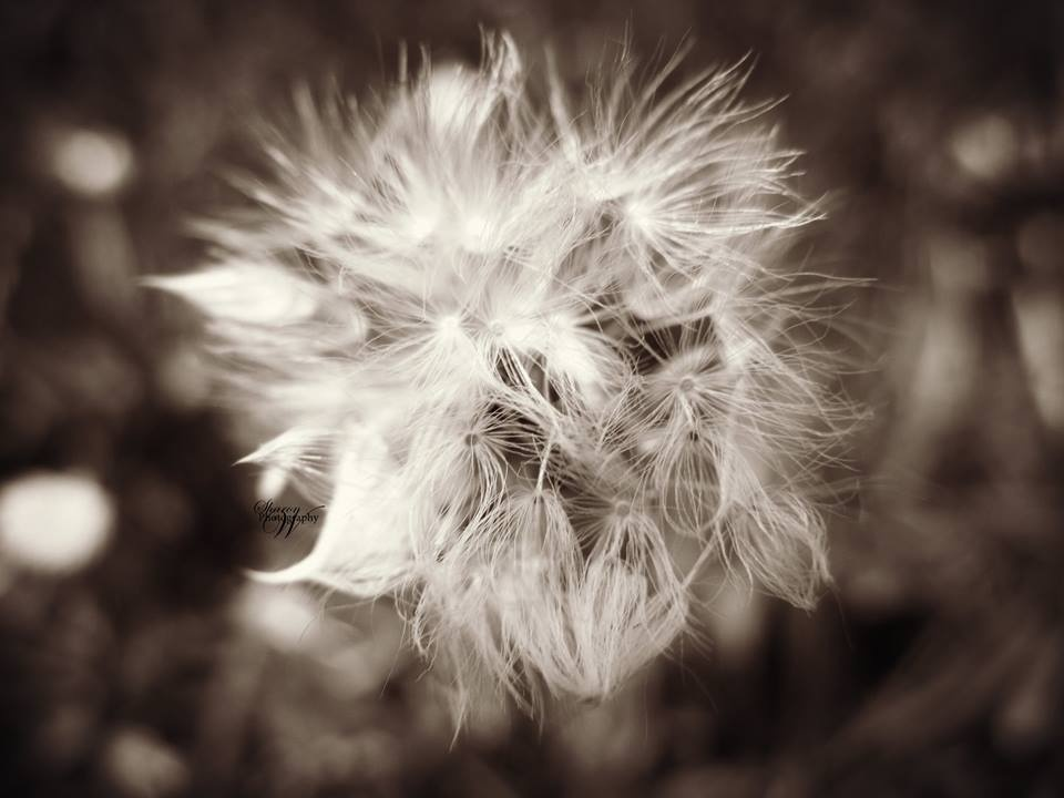 Make a wish .....Blow.... by SharW
