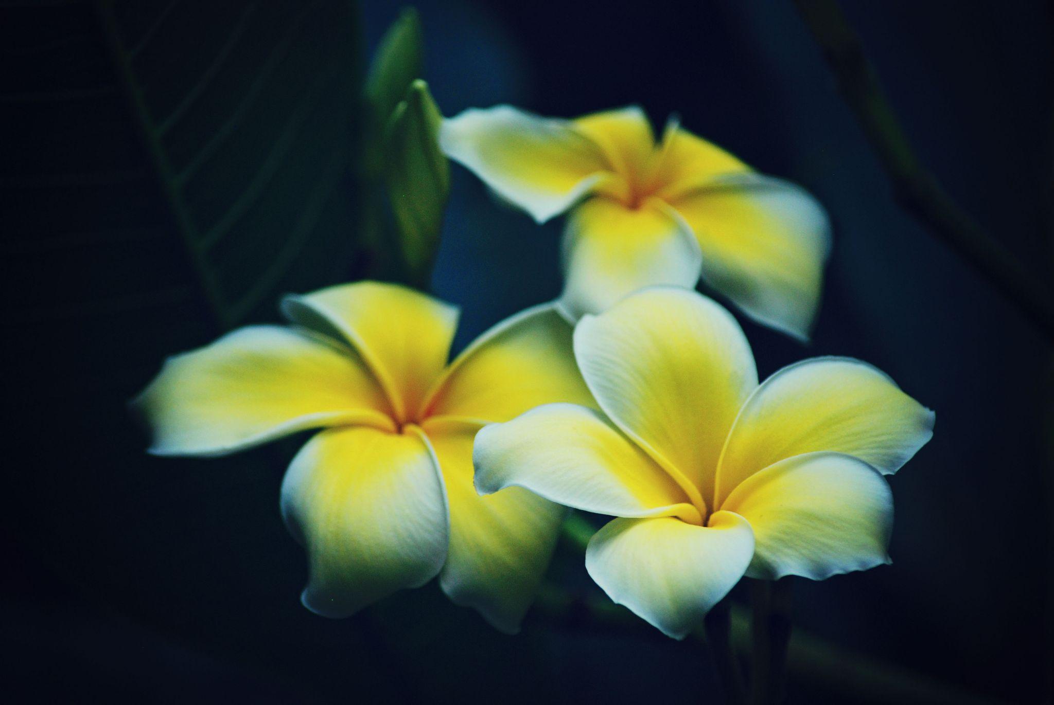 flowers by tammy loucks