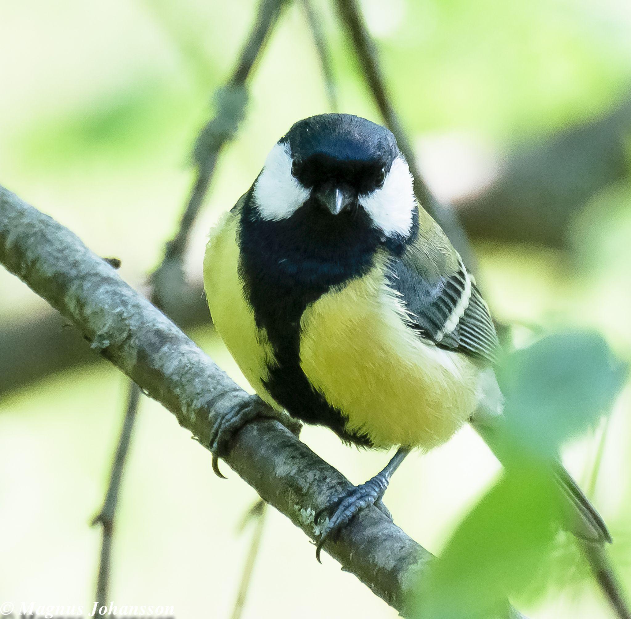 birdy by MangeNikon