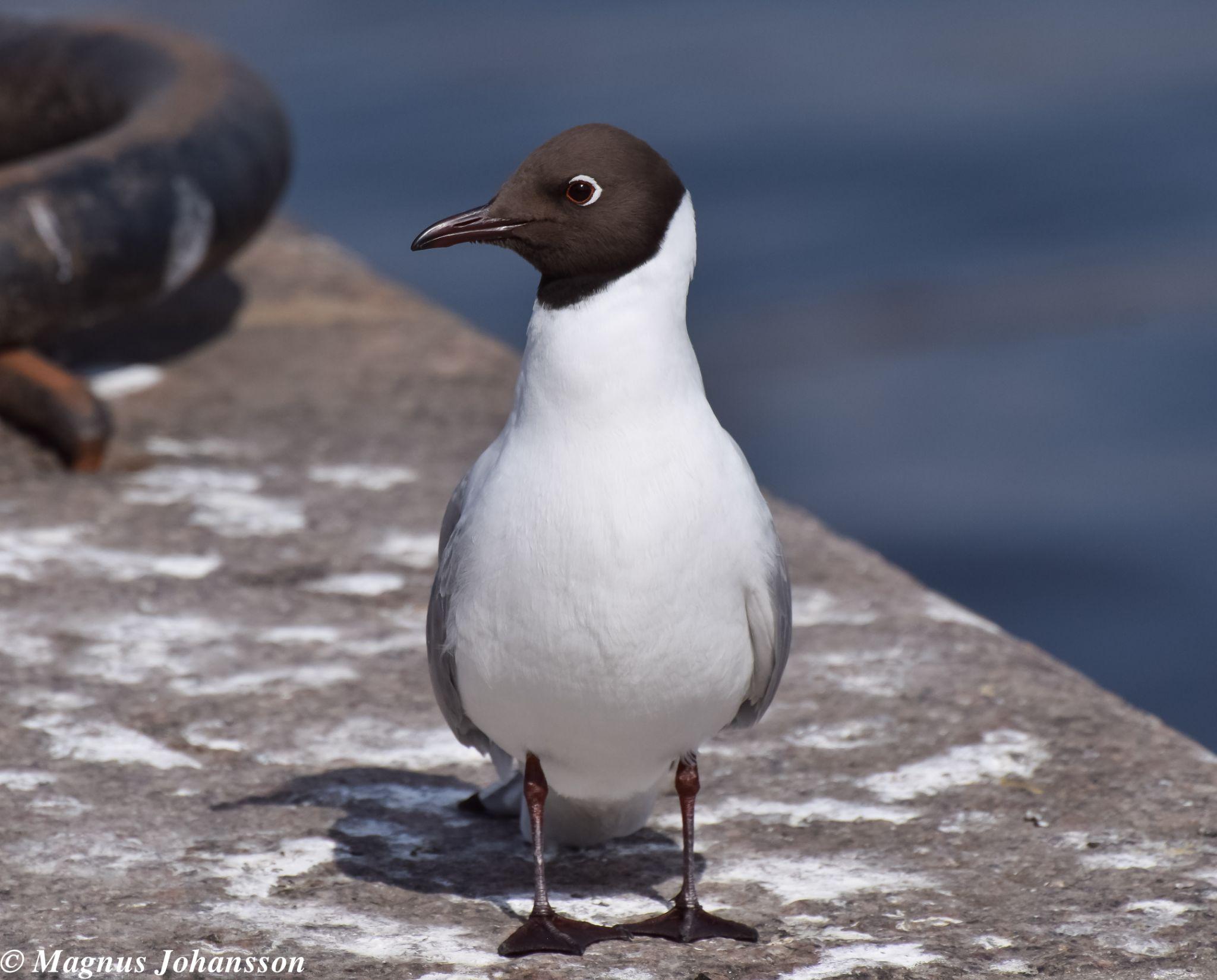 Bird by MangeNikon
