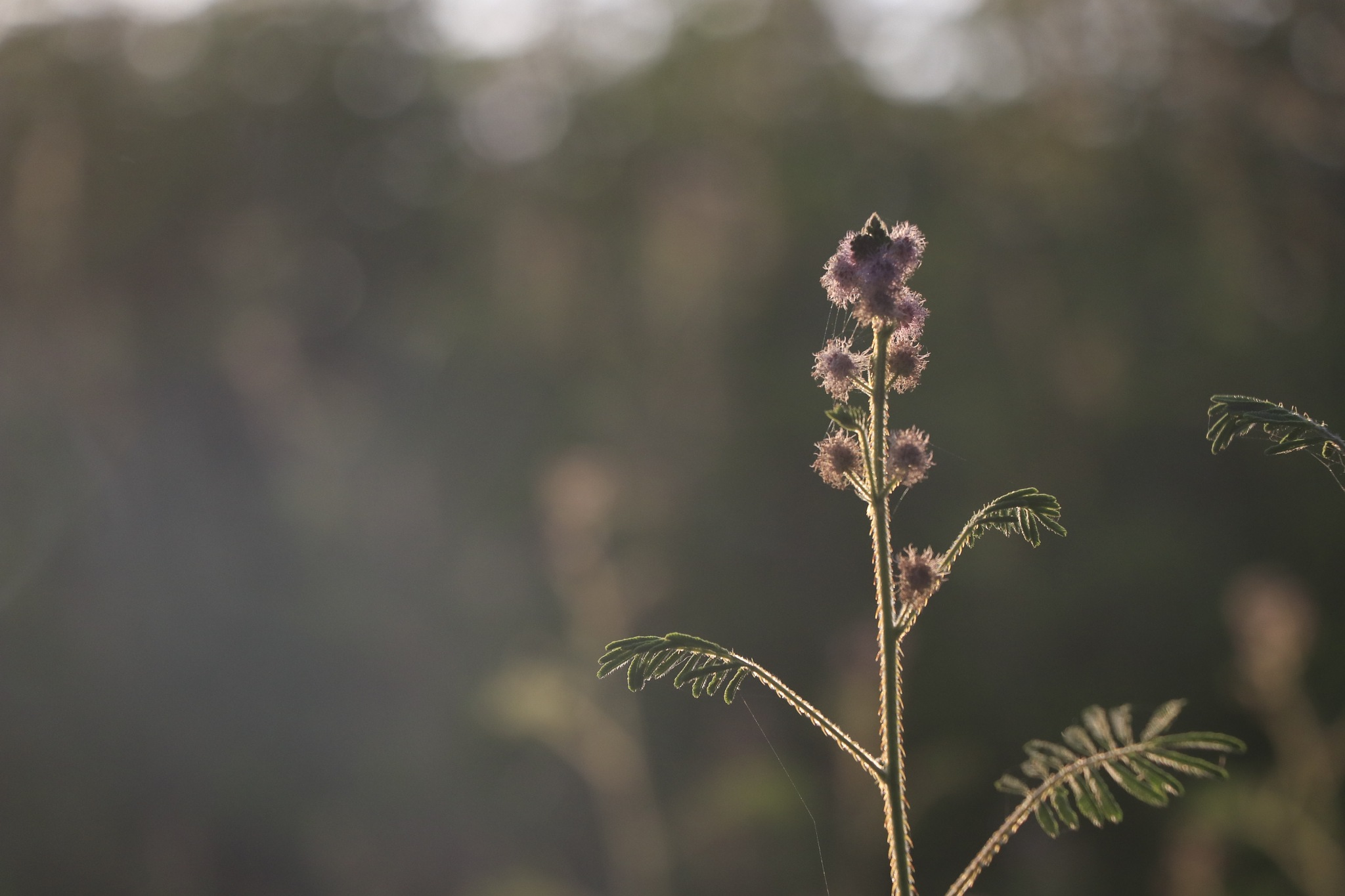 Wild Flower by karmakarsoumya2