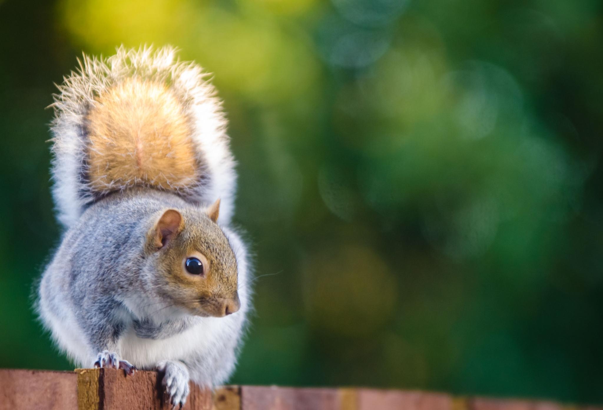 Squirrel Pose by Sandie_Burns