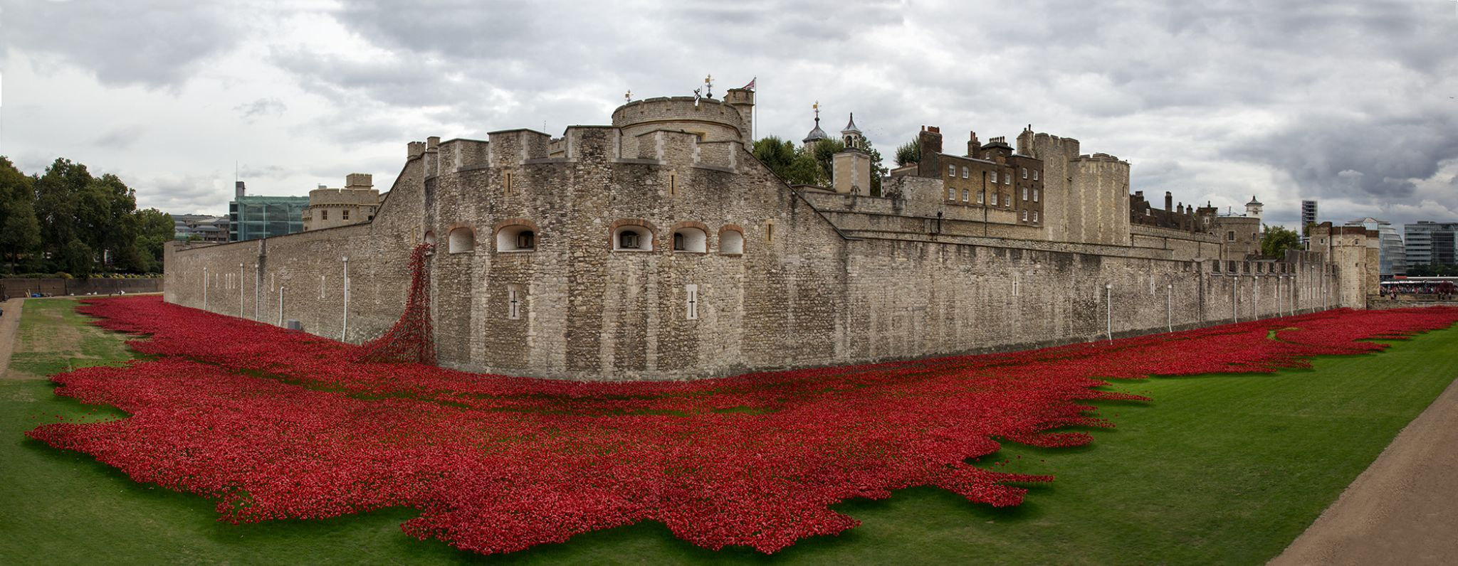 Tower Poppies by nngphoto