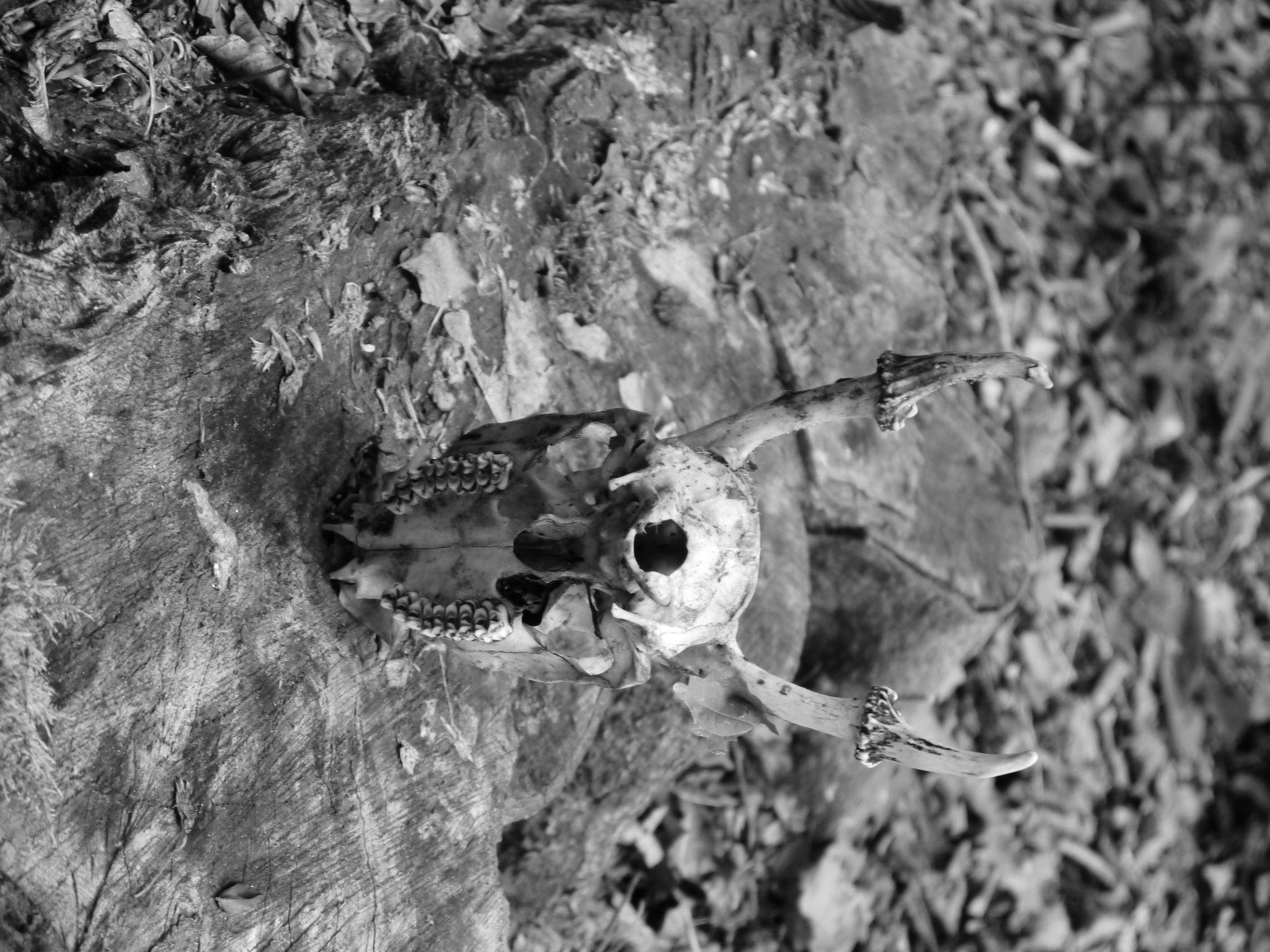 oh deer by haggisbasher123