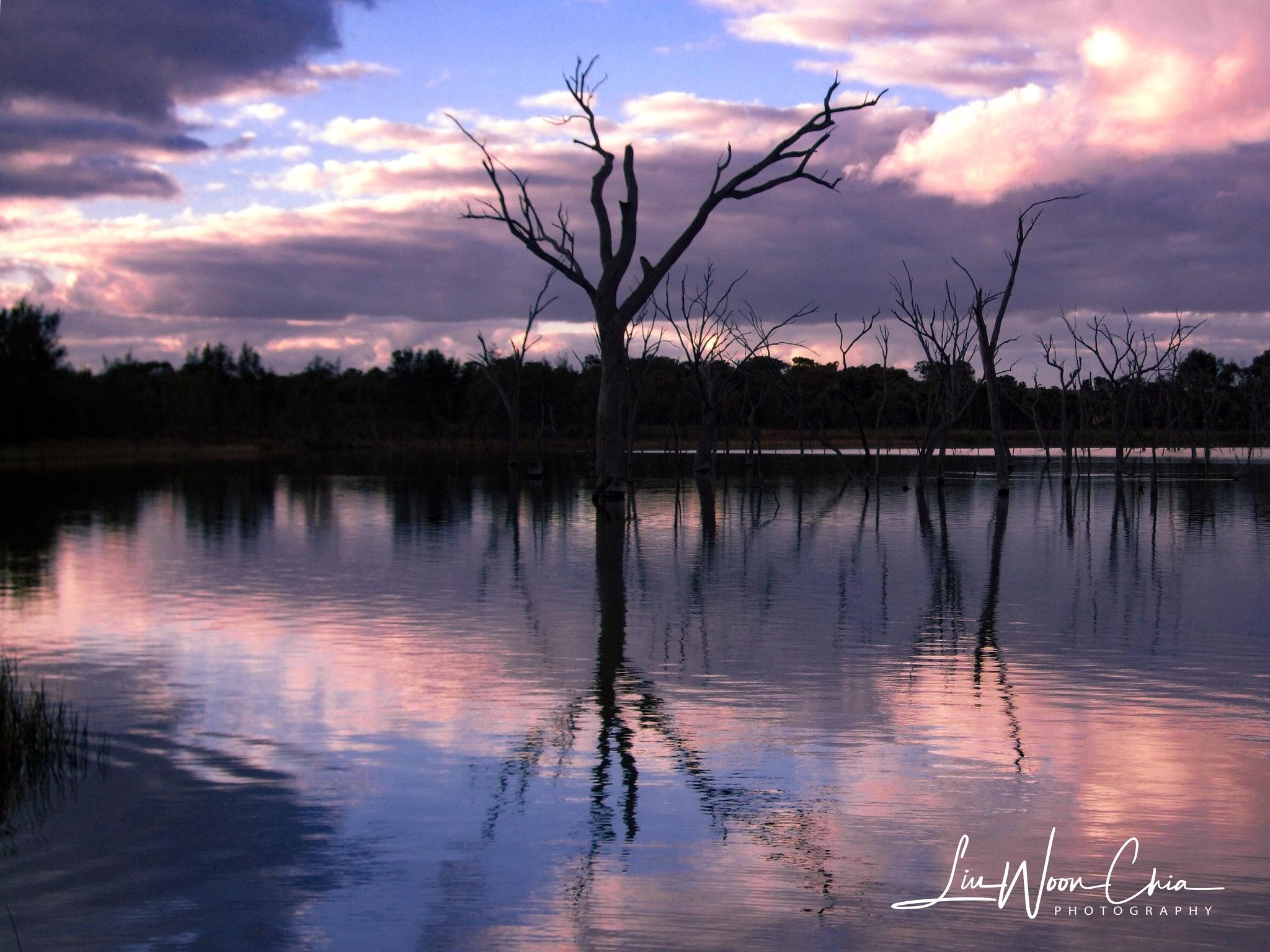 Lone tree with companions by Woon Chia Liu 🇸🇬